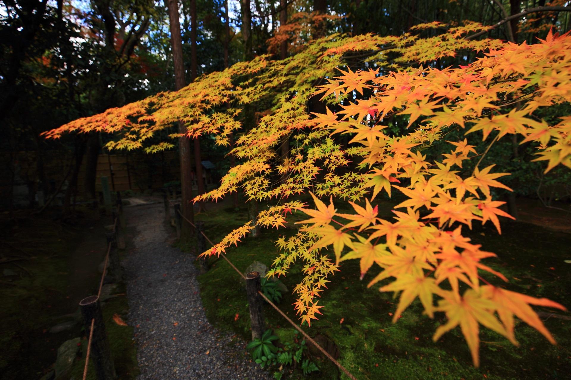 桂春院の静かな細い参道をつつむ華やかな紅葉