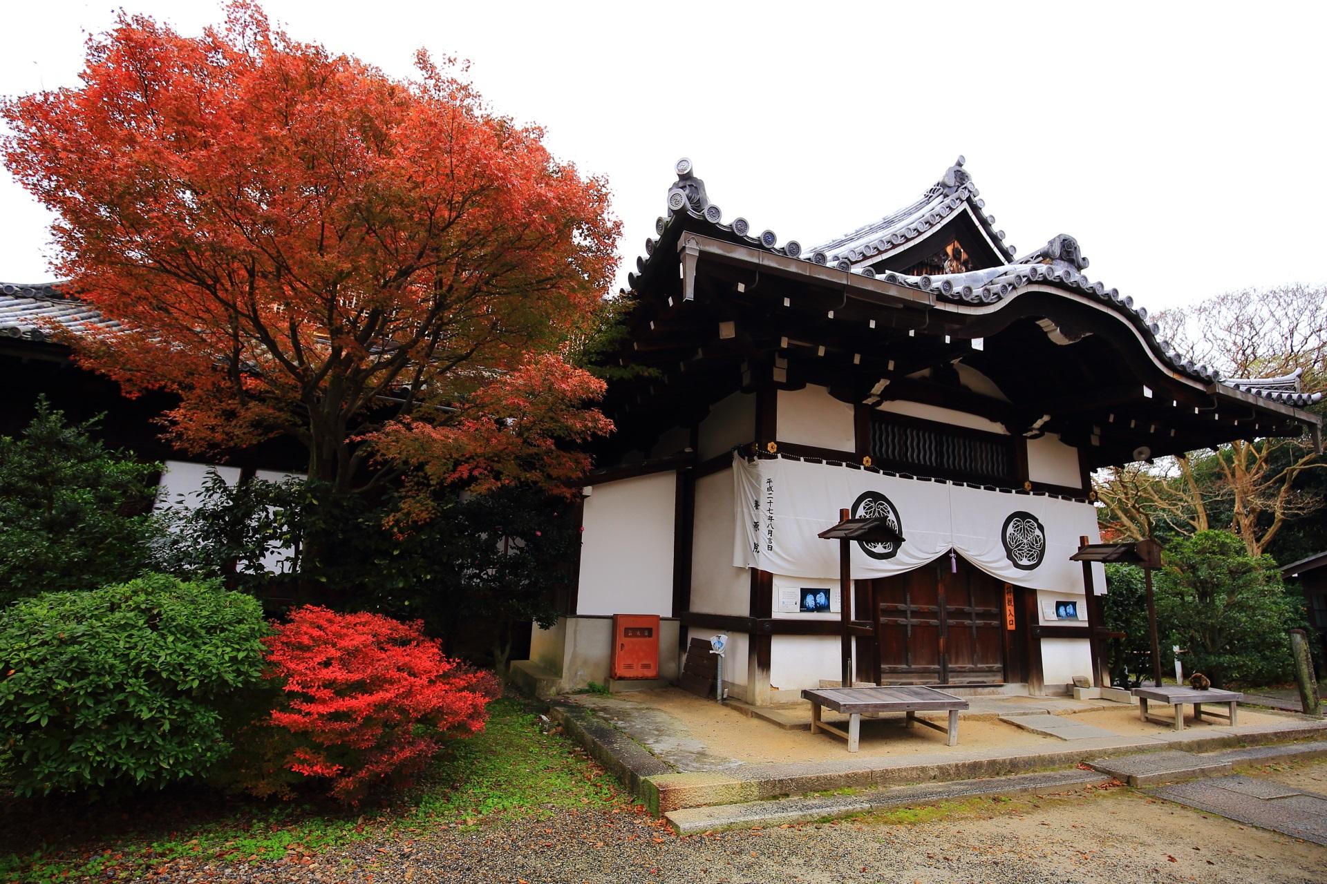 養源院の玄関横の紅葉とツツジ