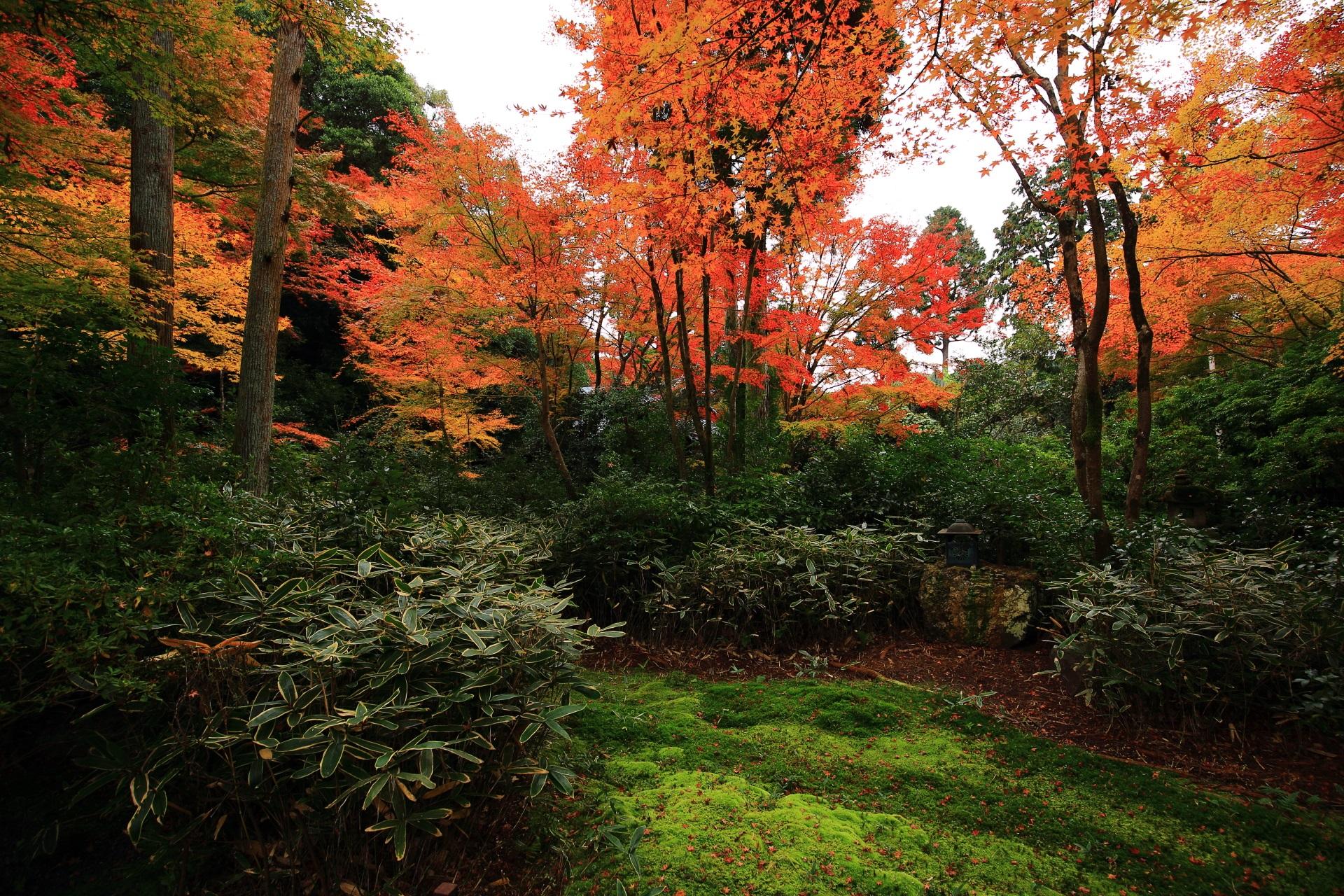 来迎院の庭園「含翆庭」(がんすいてい)の紅葉