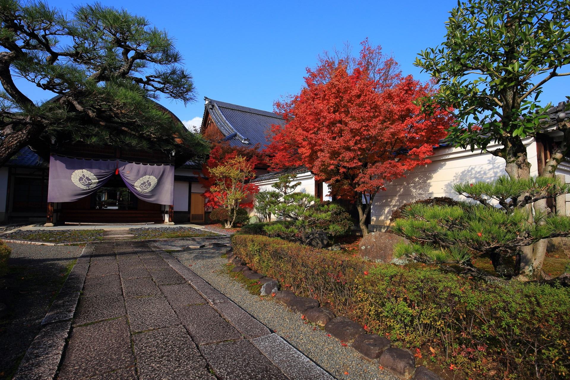 妙覚寺の玄関と庭園の白壁を彩る鮮烈な赤い紅葉