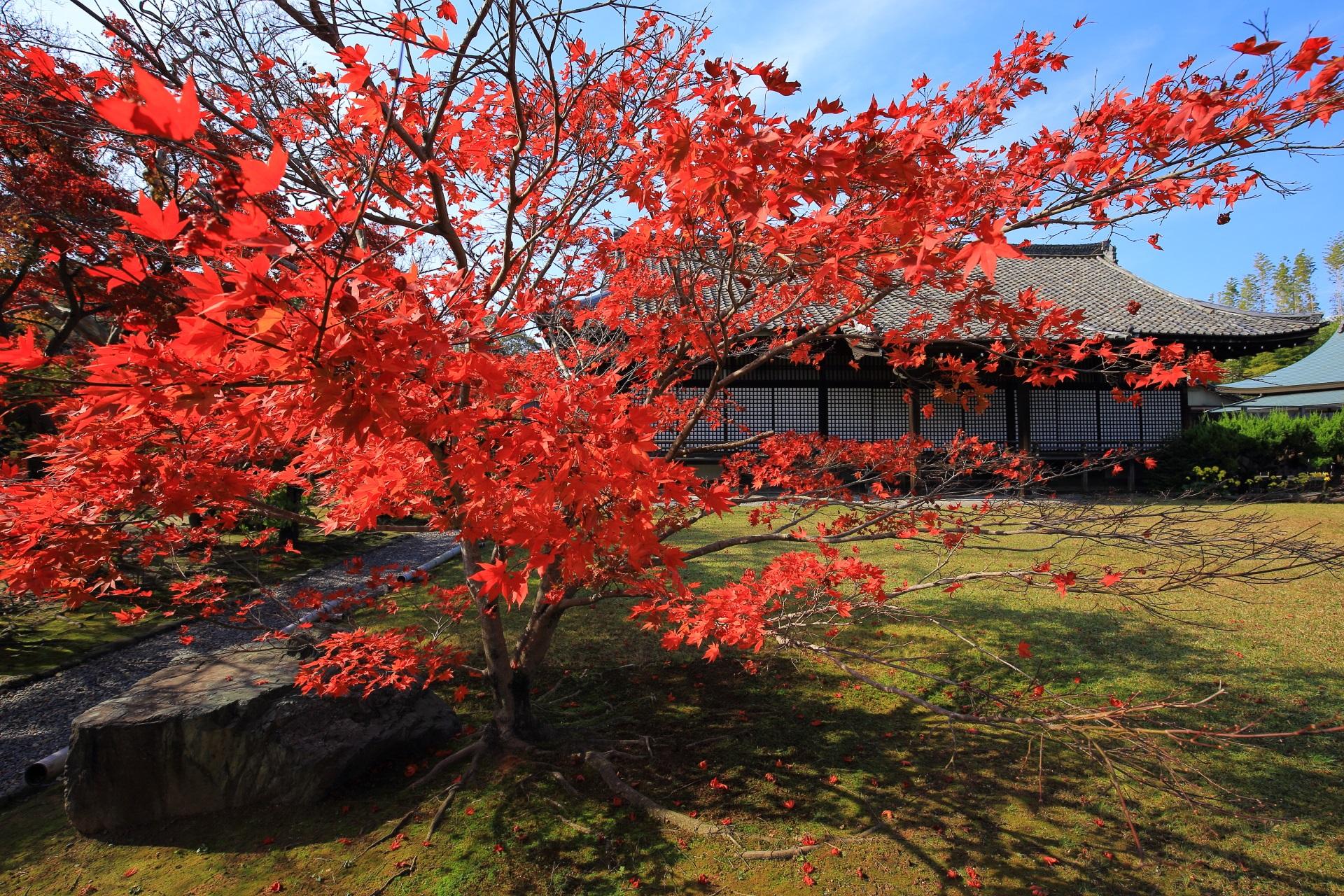 勧修寺の宸殿と見ごろの鮮やかな紅葉