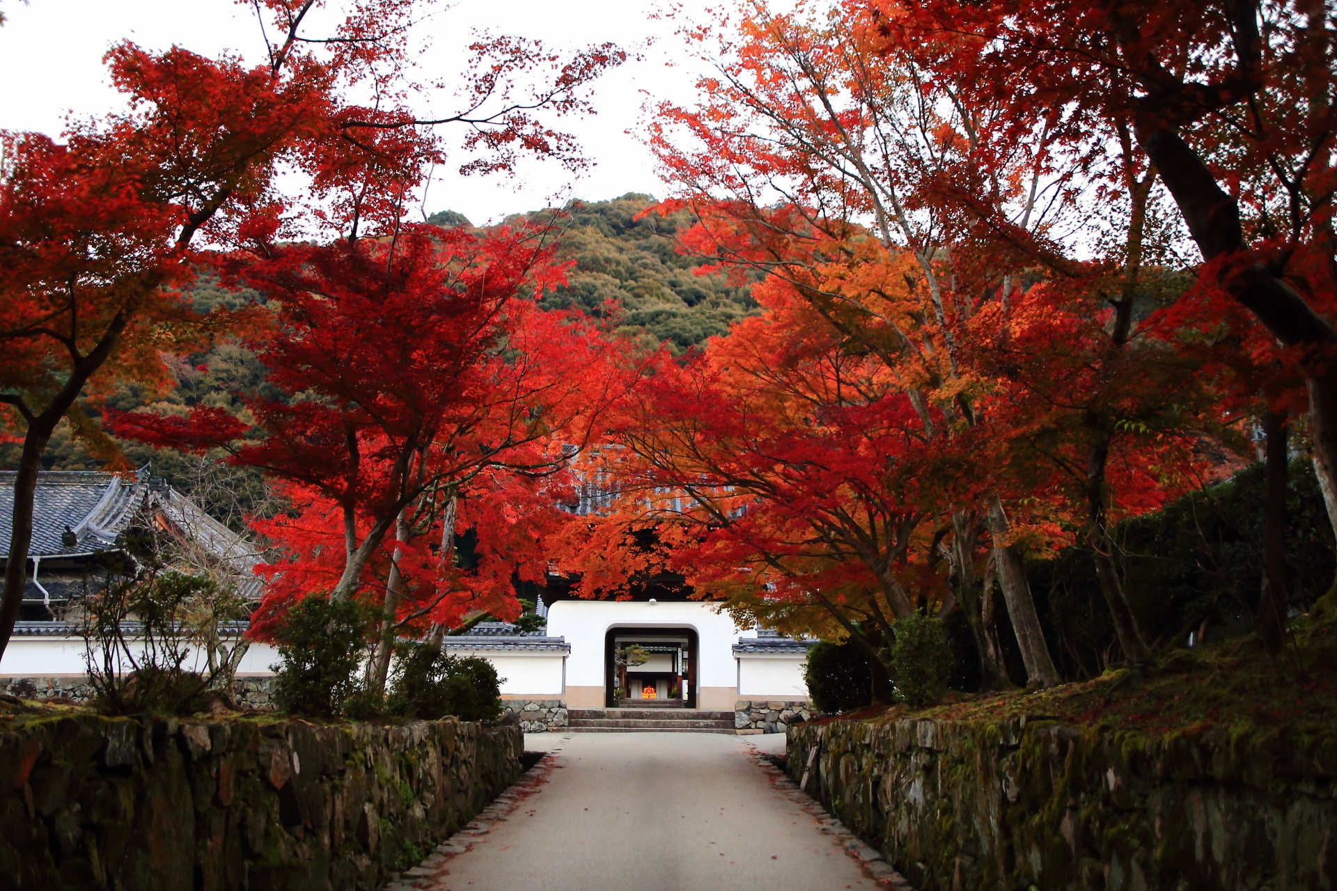 興聖寺の山門と琴坂を染める鮮やかな紅葉