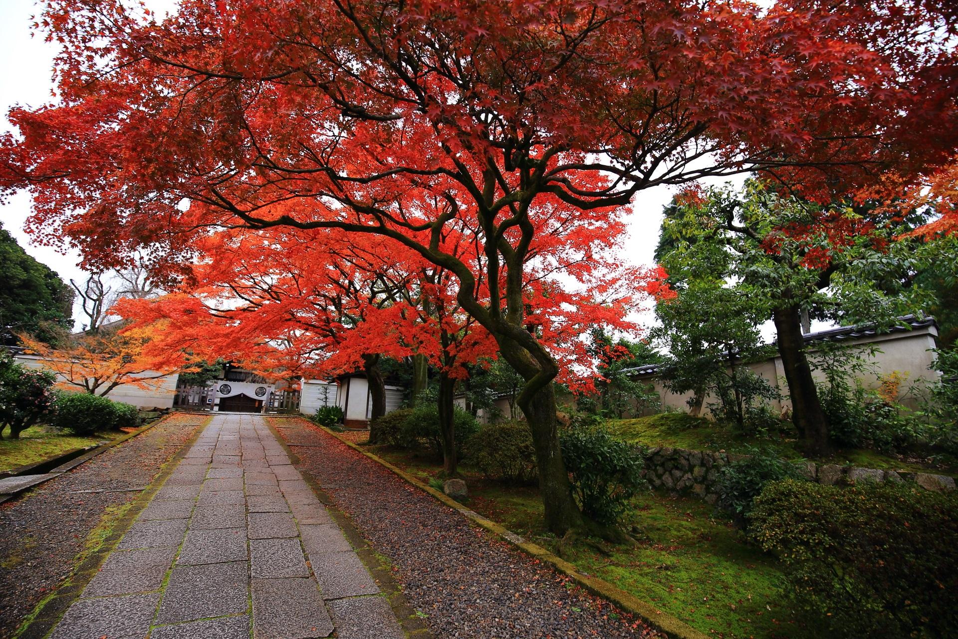 養源院の玄関と緩やかな坂の参道の紅葉