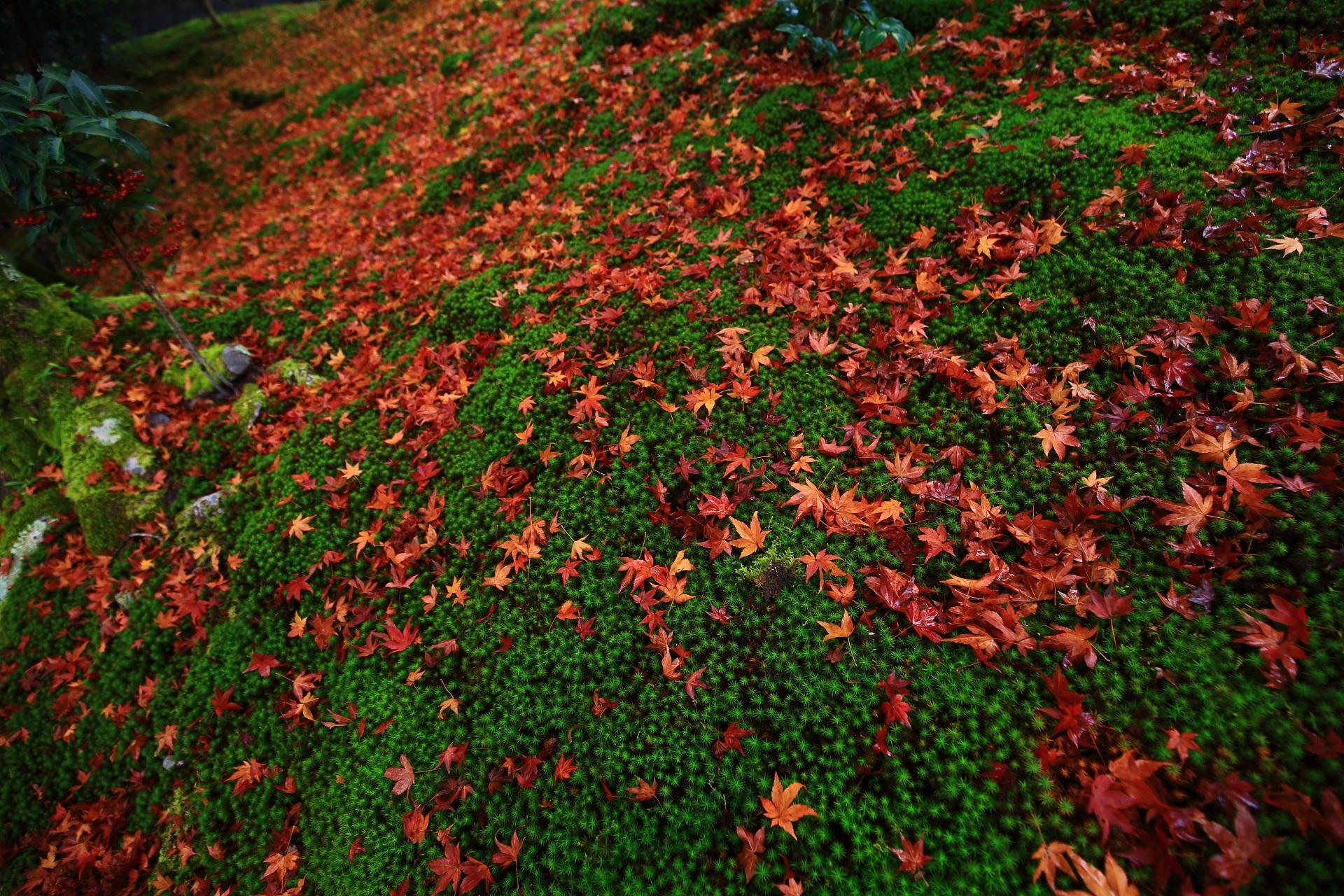 雨が美しさを引き立てる見事な苔と風情ある散り紅葉