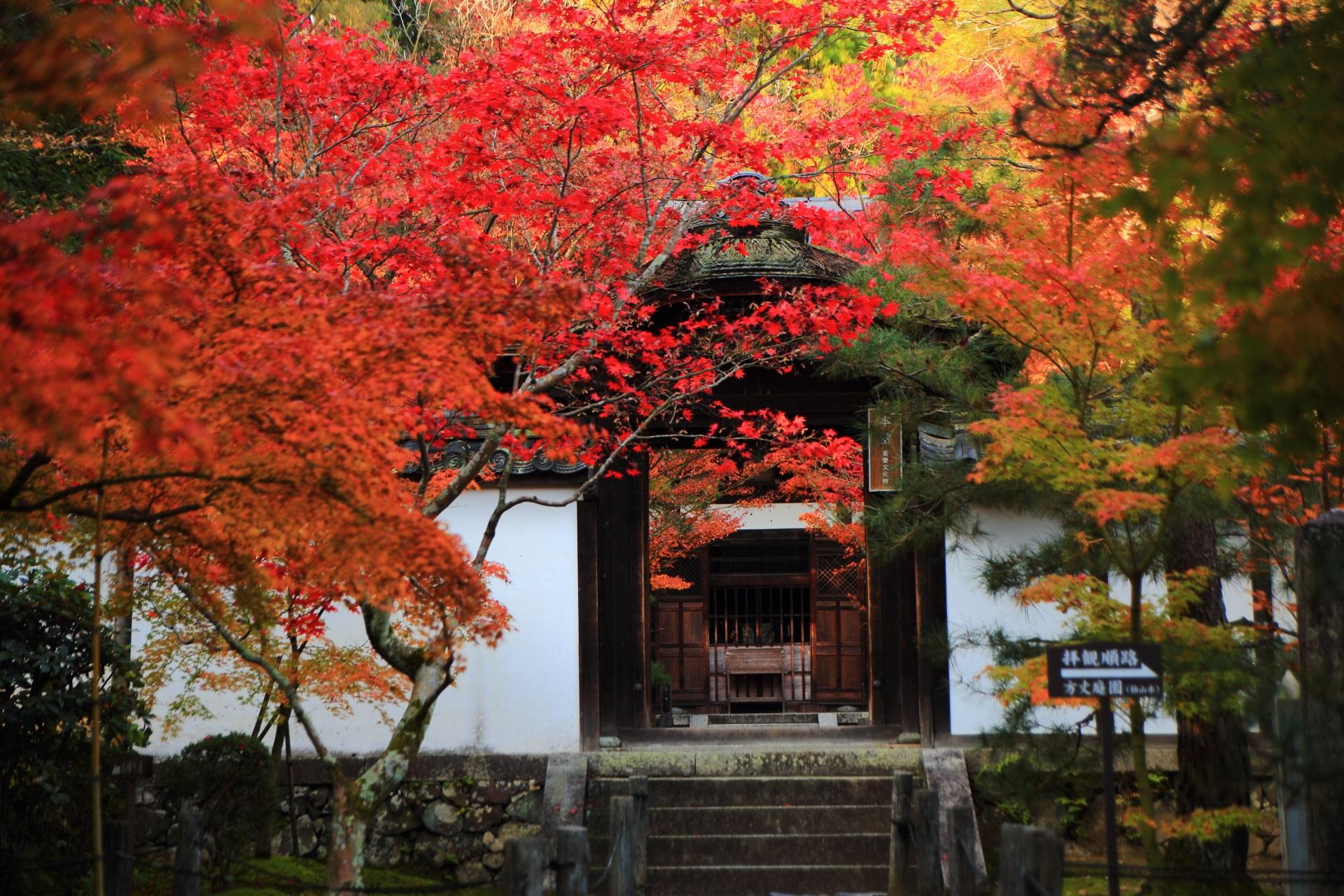 真っ赤な紅葉と中門の奥に見える本堂