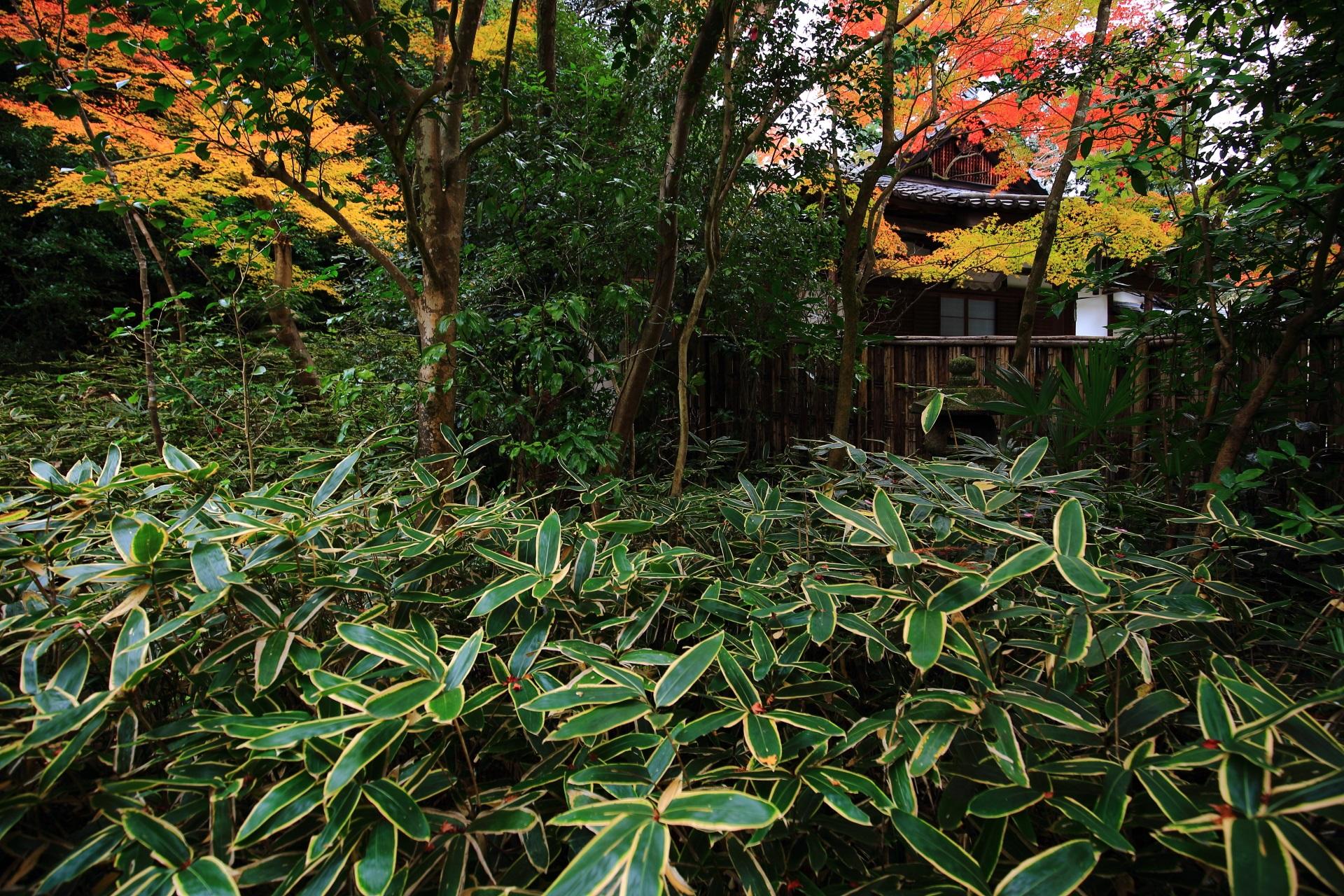 含翆庭から見える来迎院の本堂と紅葉
