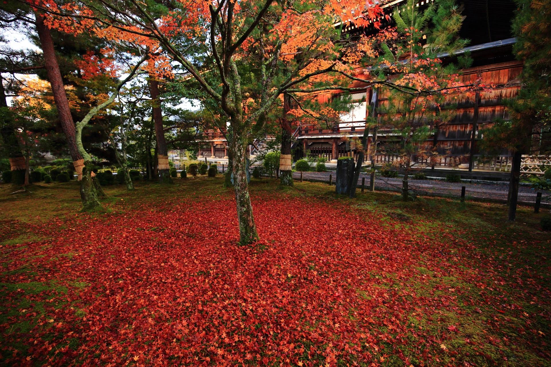 清涼寺の紅葉の絨毯