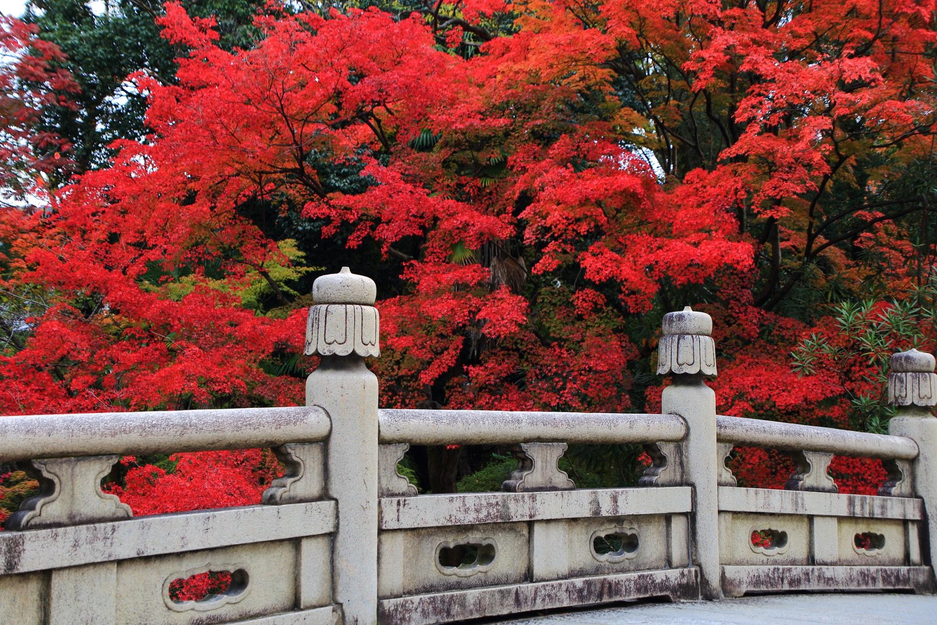 大谷本廟の風情ある石橋に良く合う鮮やかな紅葉