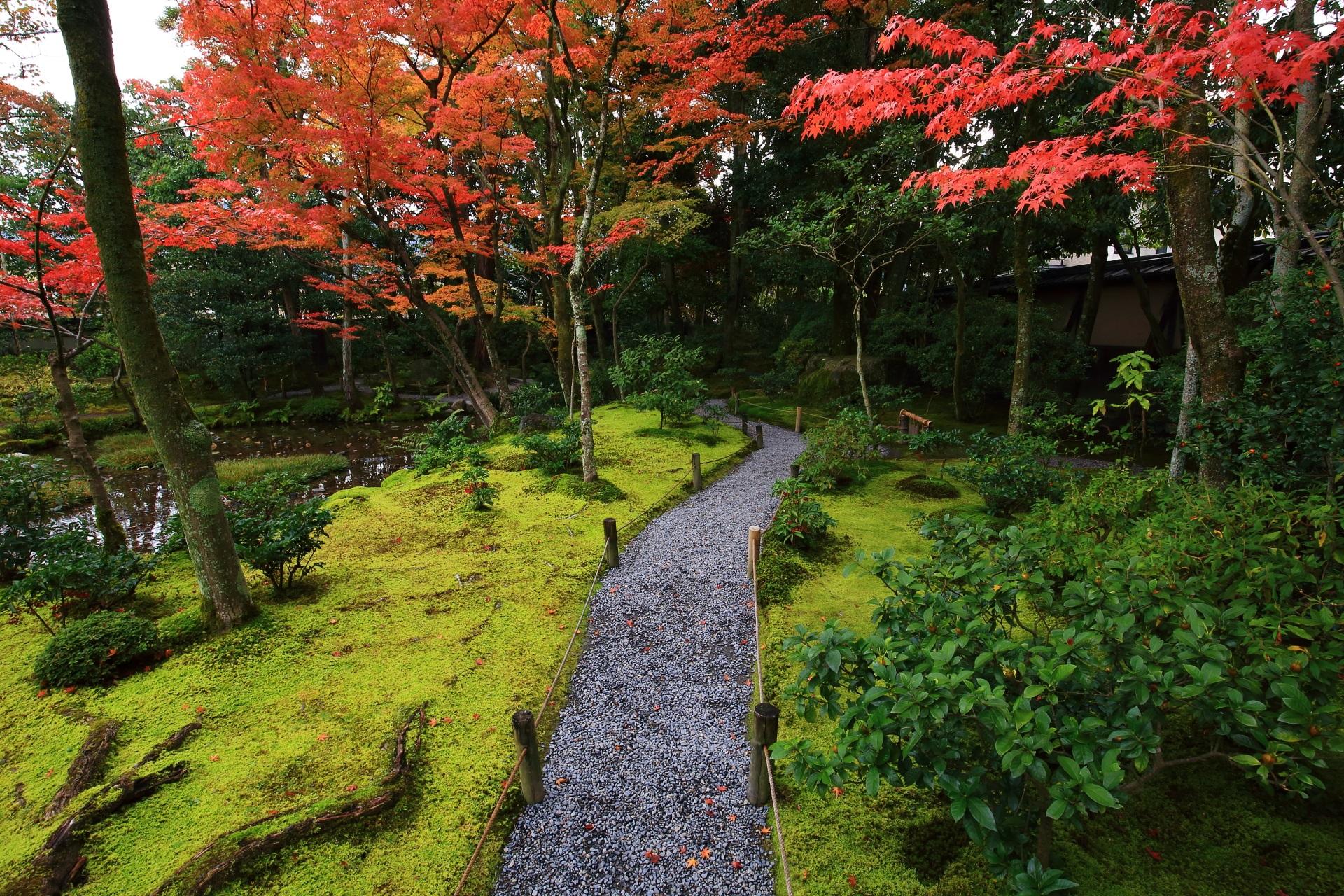 穏やかな苔に映える無鄰菴の鮮やかな赤い紅葉