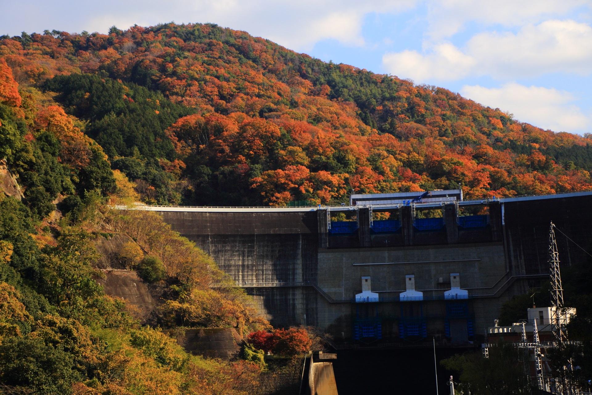 天ヶ瀬ダム 紅葉 山々とダムを彩る暖かな秋色