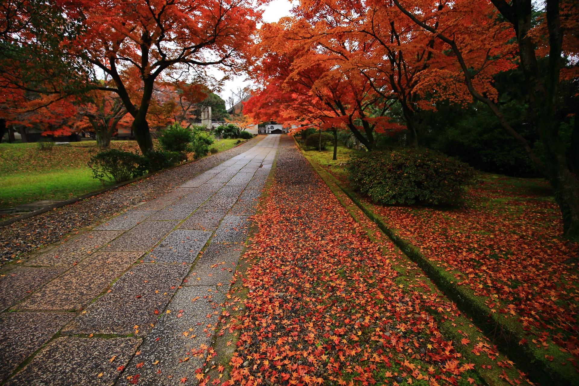 養源院の参道の下から眺めた玄関と散り紅葉