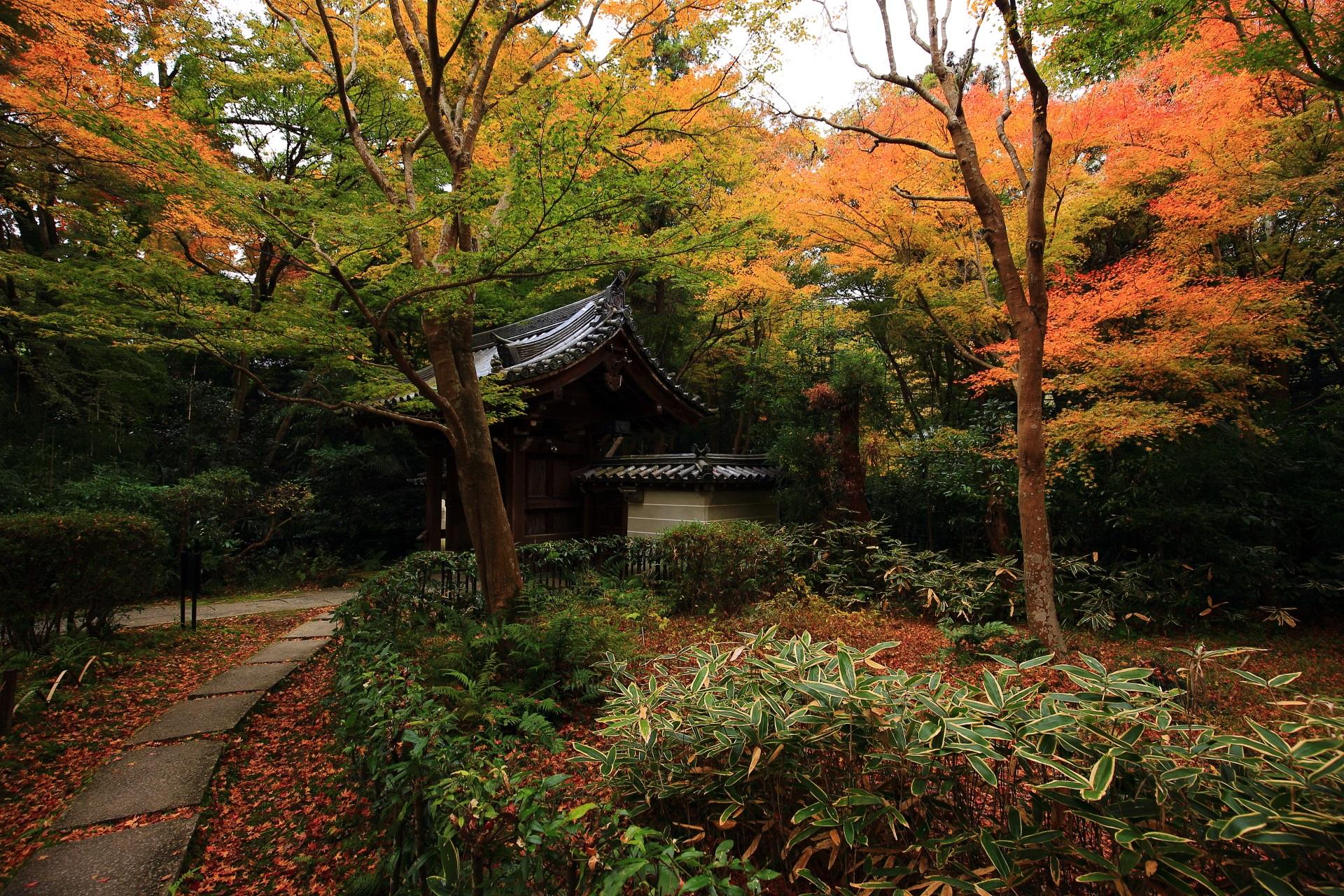 淡い紅葉と散りもみじに染まる来迎院の山門周辺