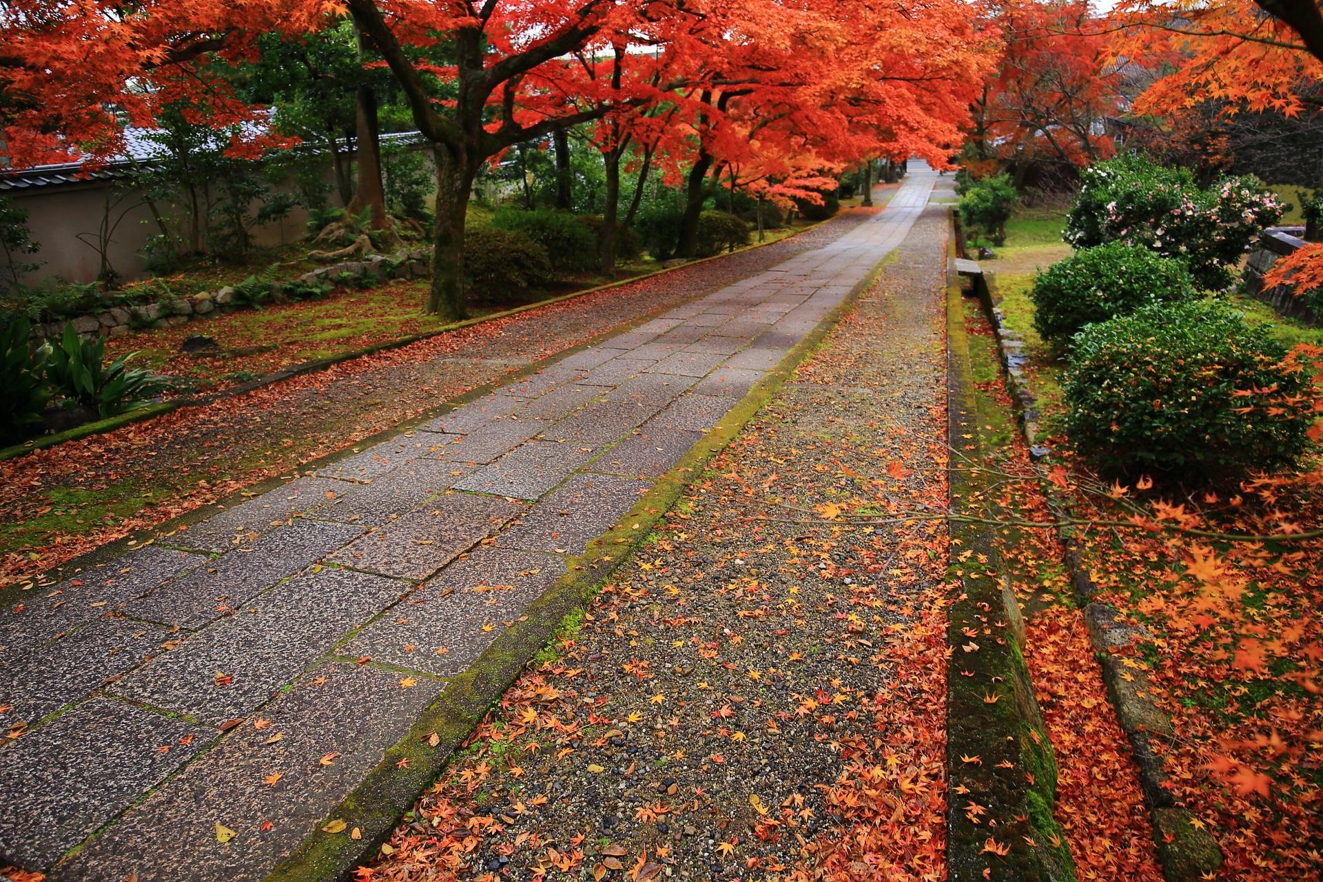 参道の脇を染める散り紅葉