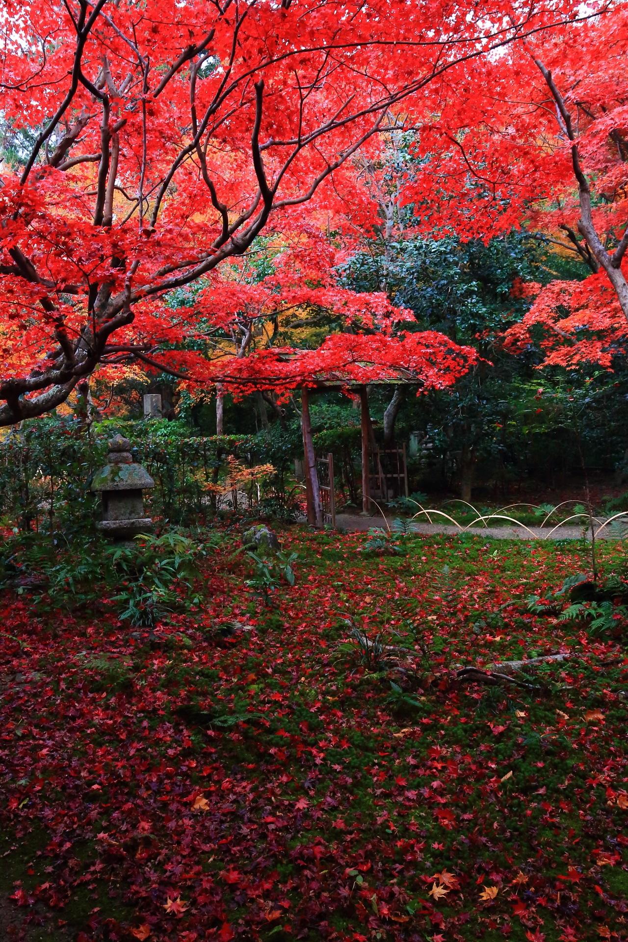 厭離庵の素晴らしい紅葉と秋の情景