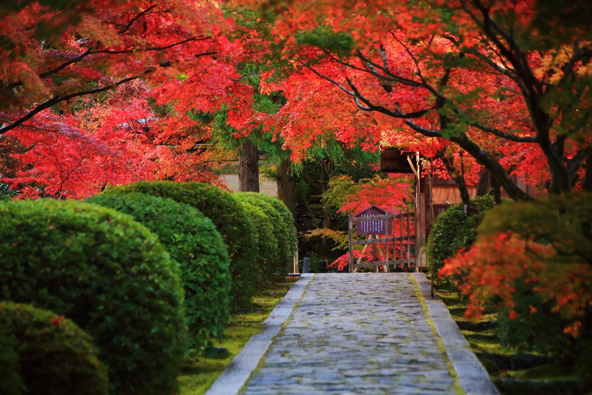 緑のサツキと赤い紅葉の参道