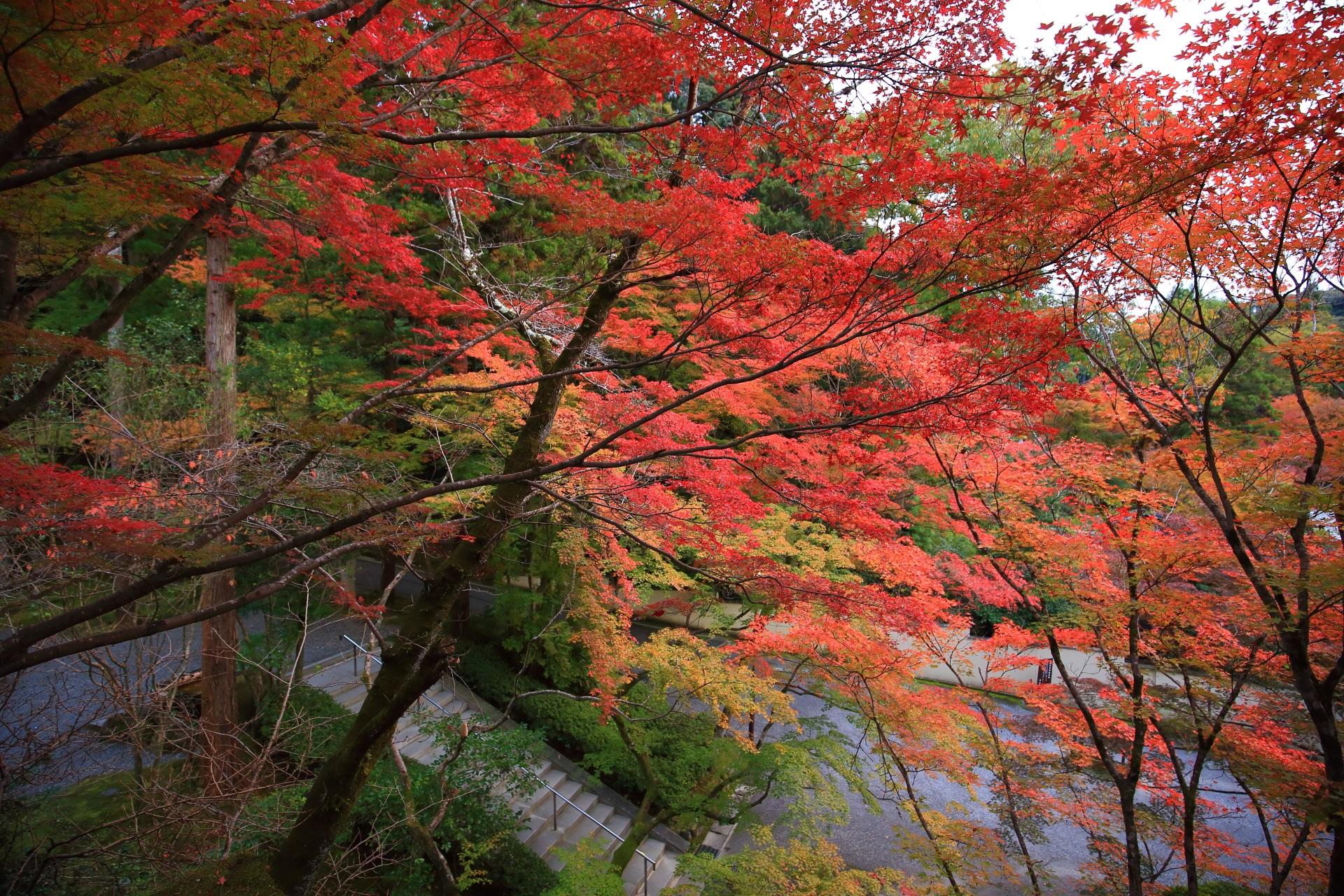 広がる素晴らしい紅葉の世界