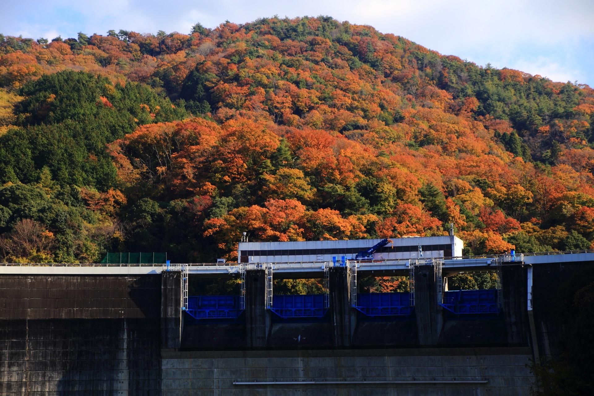 他ではあまり見られない天ヶ瀬ダムと槇尾山の独特の紅葉