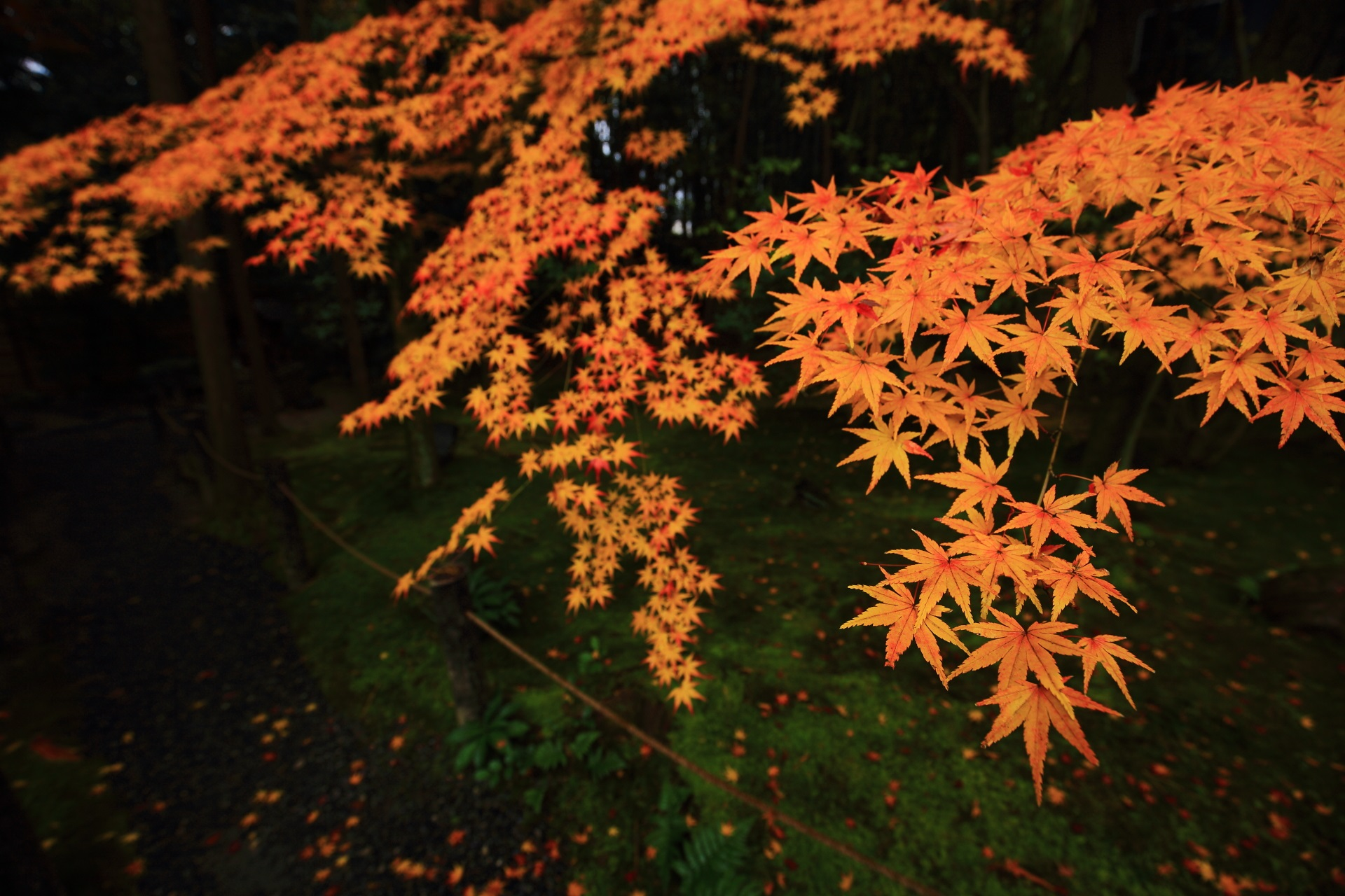 桂春院の晩秋を彩る極上のオレンジの紅葉