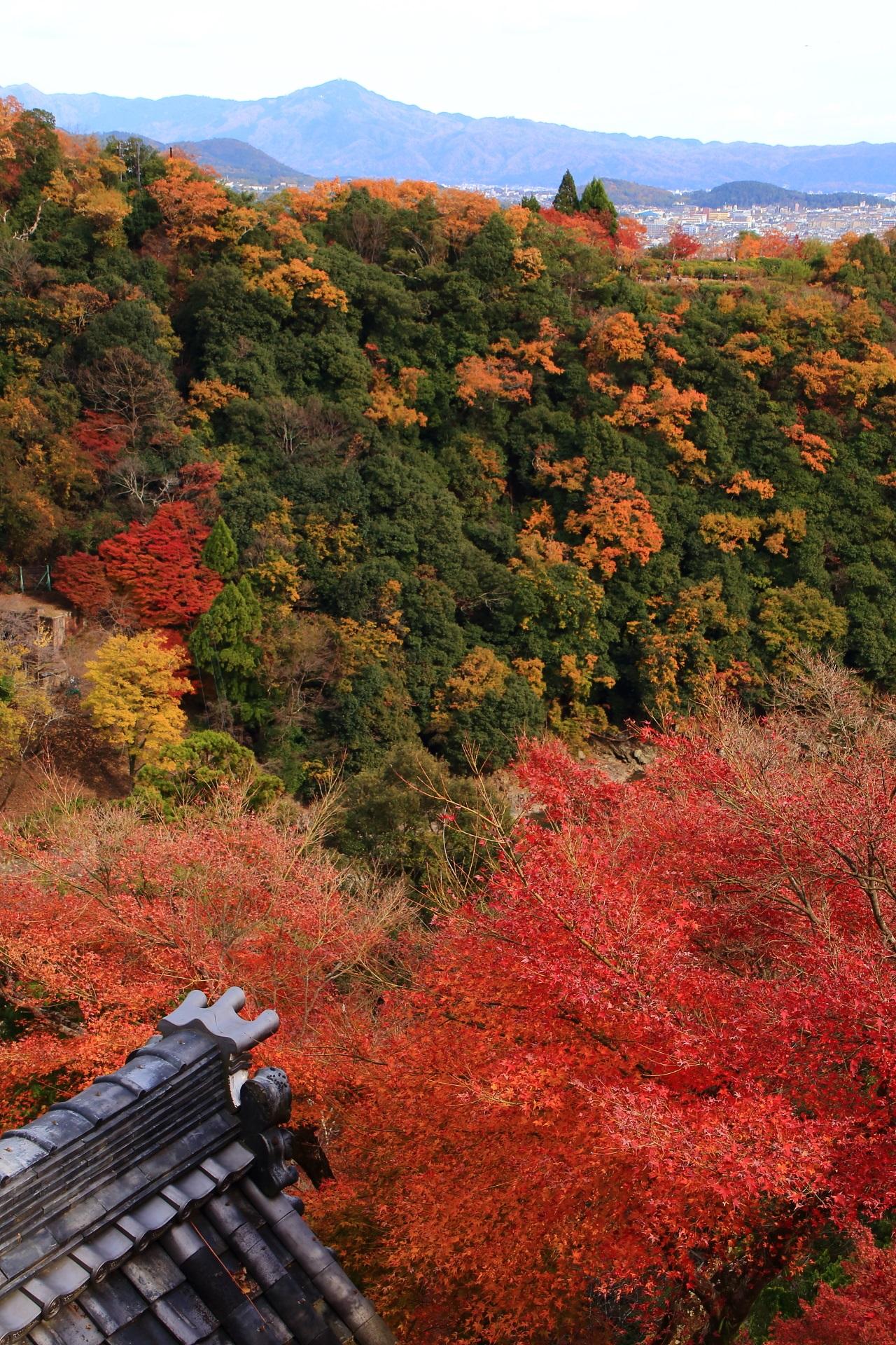 大悲閣の燃え上がるような紅葉とその奥に広がる秋に色づいた嵐山