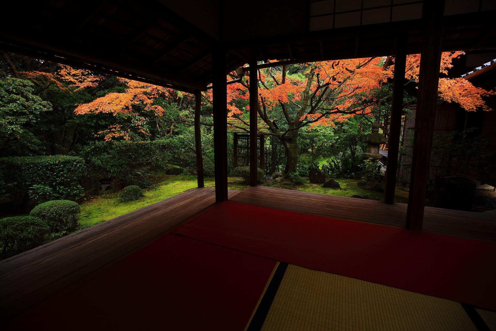 赤い絨毯が演出する美しい晩秋の紅葉