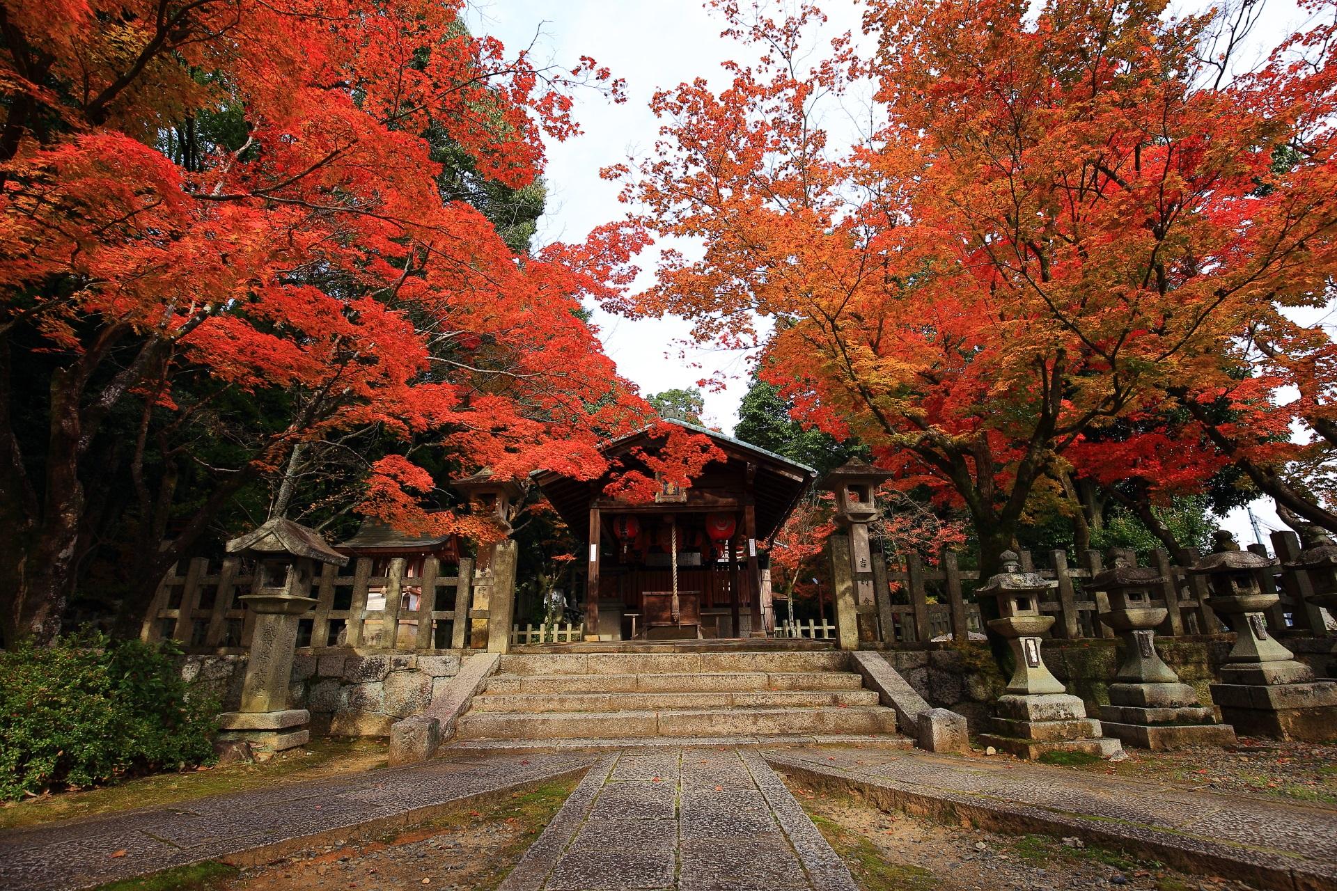 竹中稲荷神社の本殿と空を覆う紅葉
