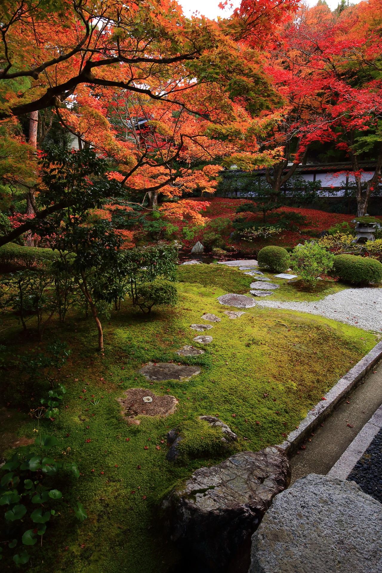 苔に飛び石の配された風情ある庭園の見事な紅葉