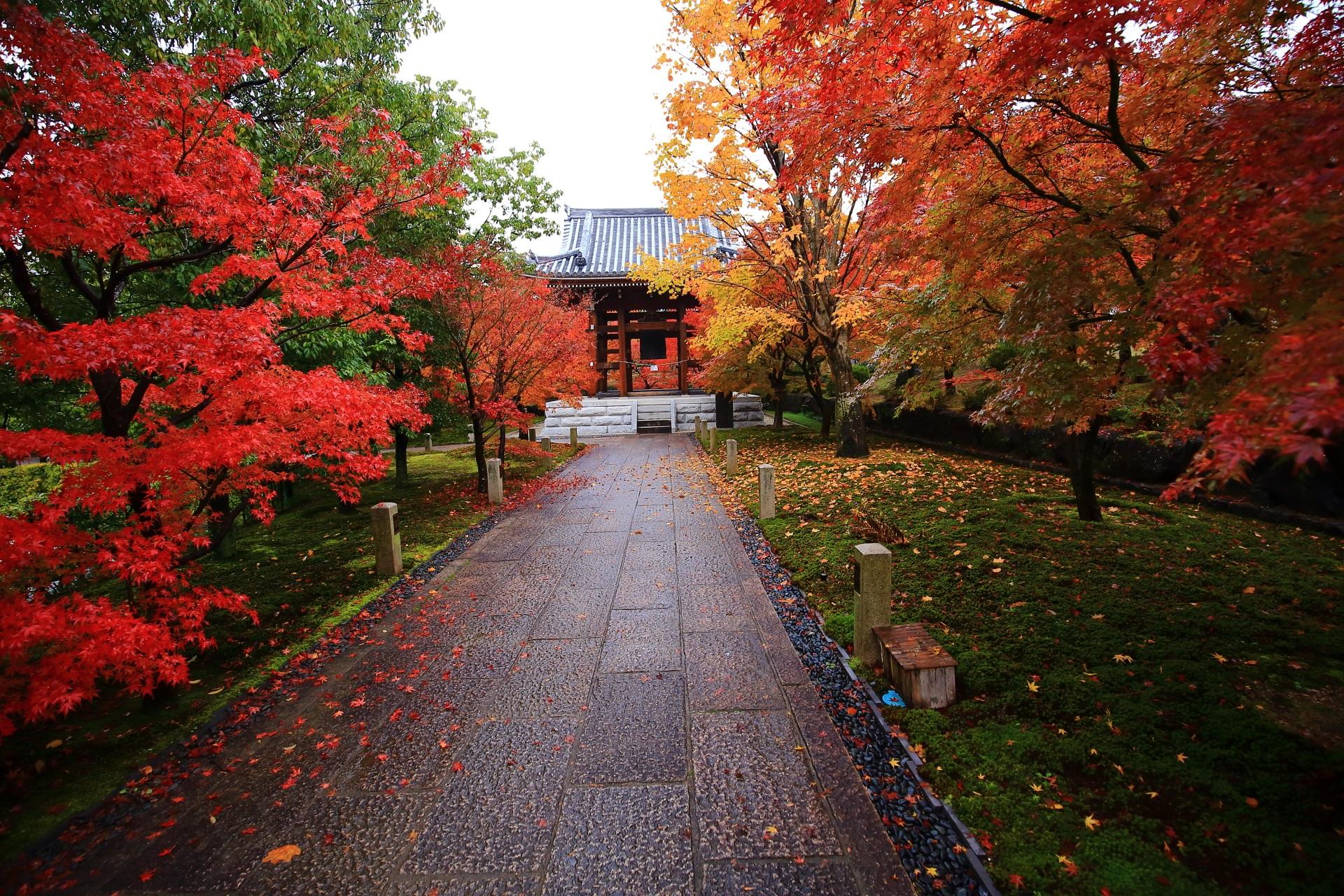 色とりどりの紅葉につつまれた智積院の雨上がりの参道と鐘楼