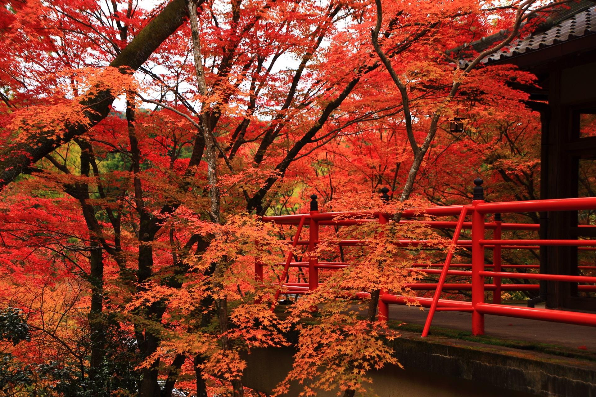 遠目から眺めた茶所の紅葉