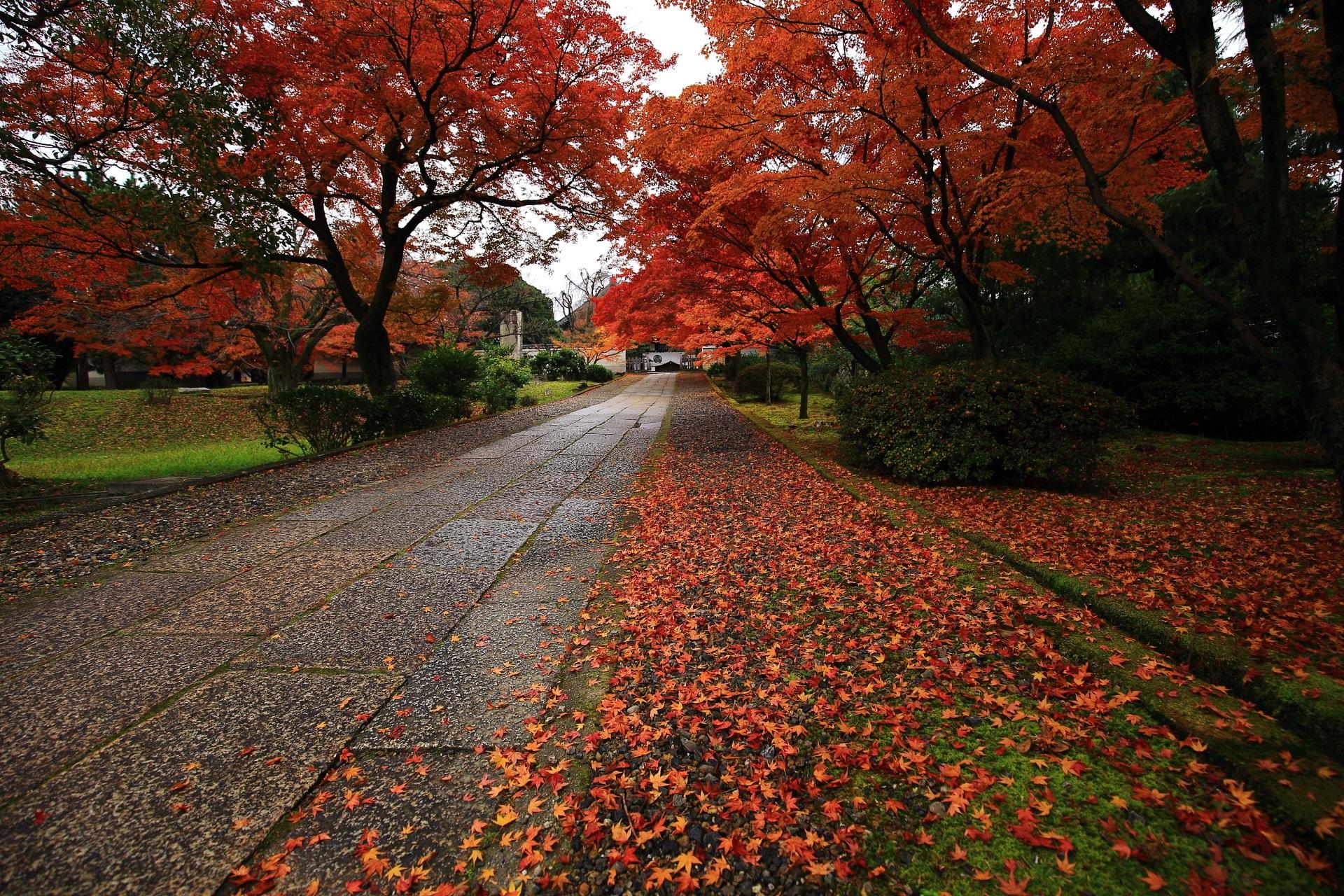 参道と緑の苔を彩る色とりどりの散紅葉