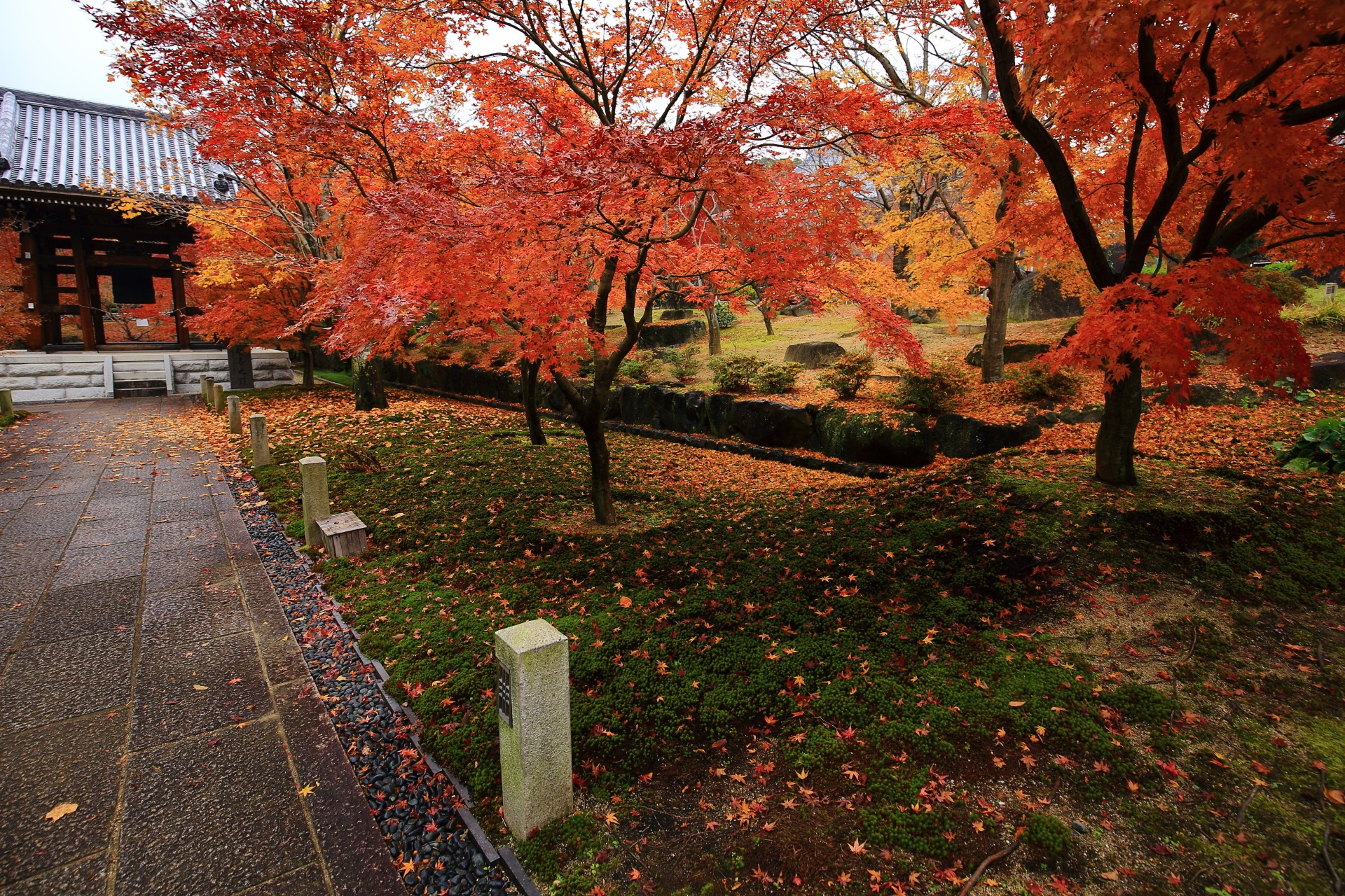 智積院の早朝の境内を秋色に彩る多彩な紅葉と散りもみじ