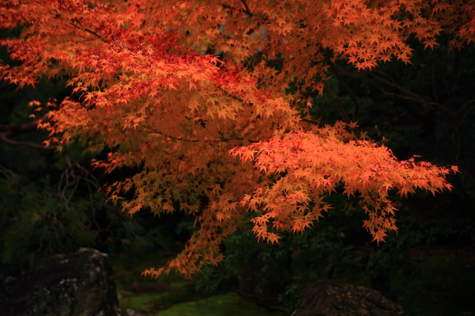 オレンジ色の鮮やかで深い色合いの紅葉