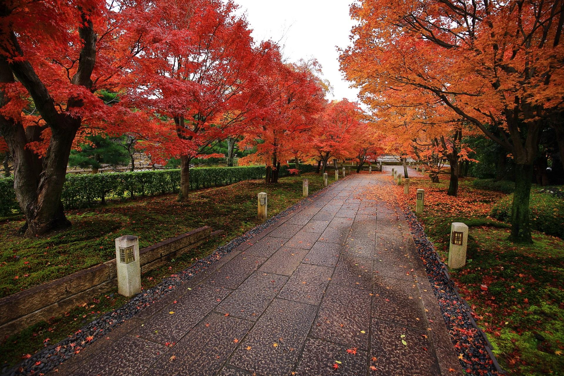 智積院の更に色づきが深まった晩秋の紅葉