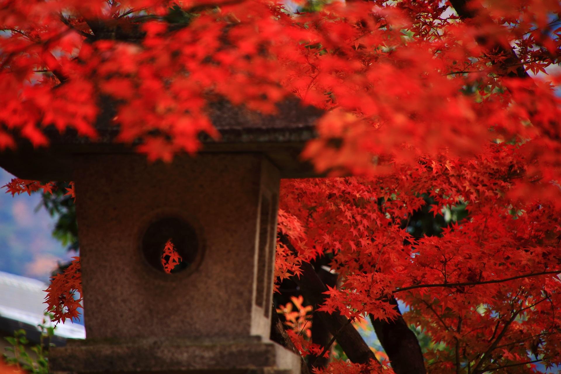 溢れんばかりの見事な紅葉につつまれる石燈籠