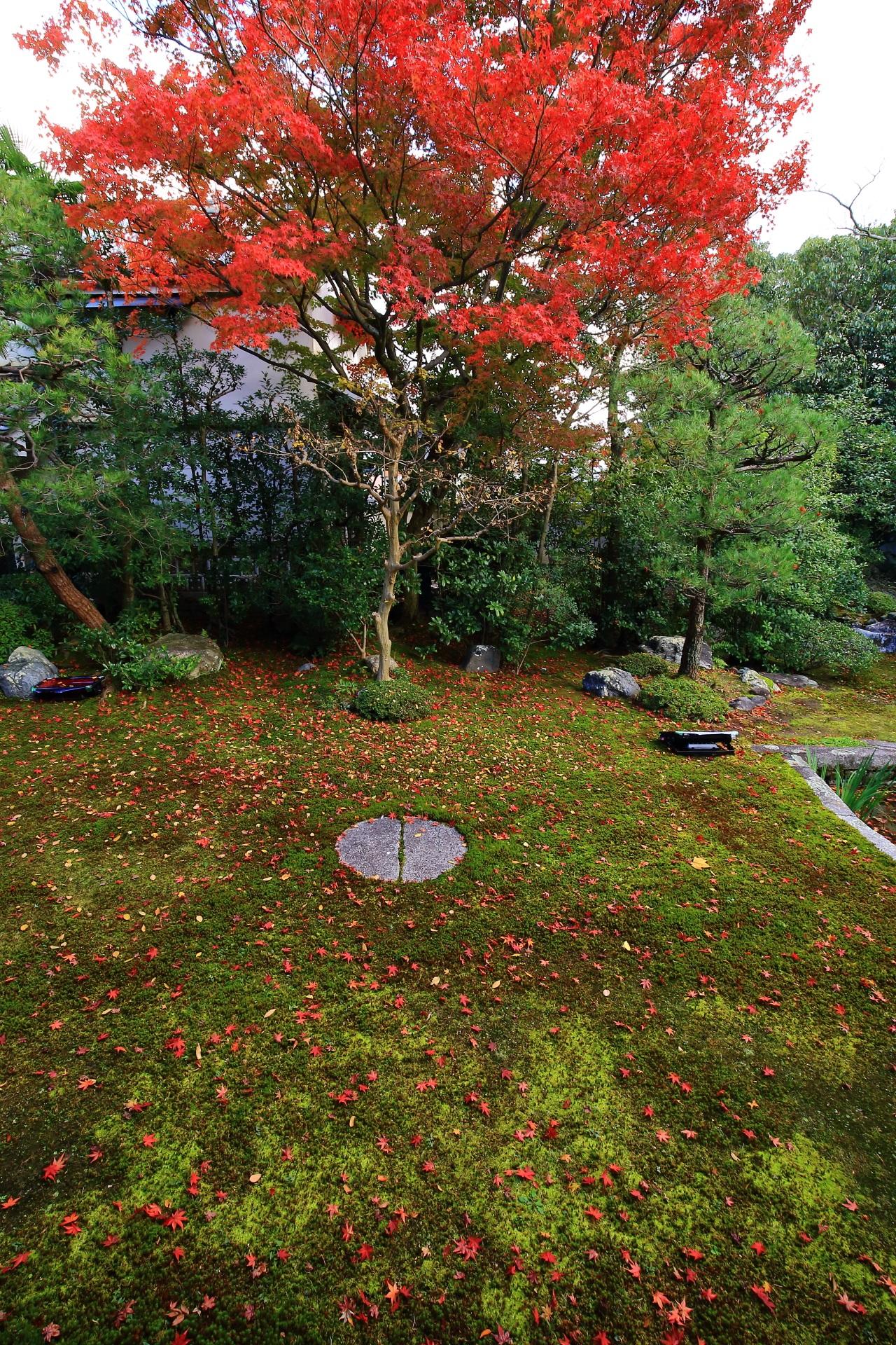 本法寺の燃え上がるような真っ赤な紅葉と静かな苔を華やぐ散り紅葉
