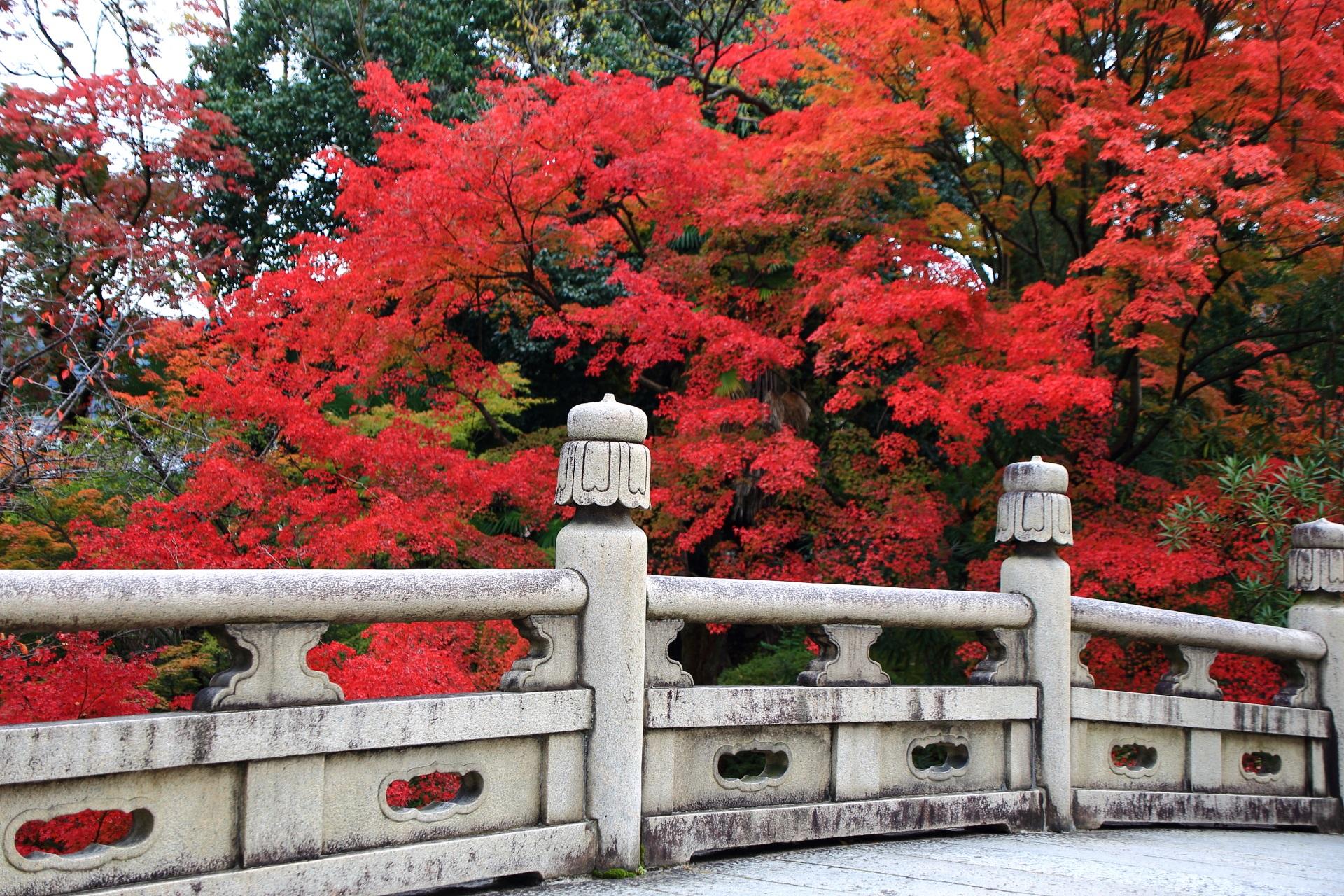 大谷本廟の石橋に映える鮮烈な色合いの燃え上がる紅葉