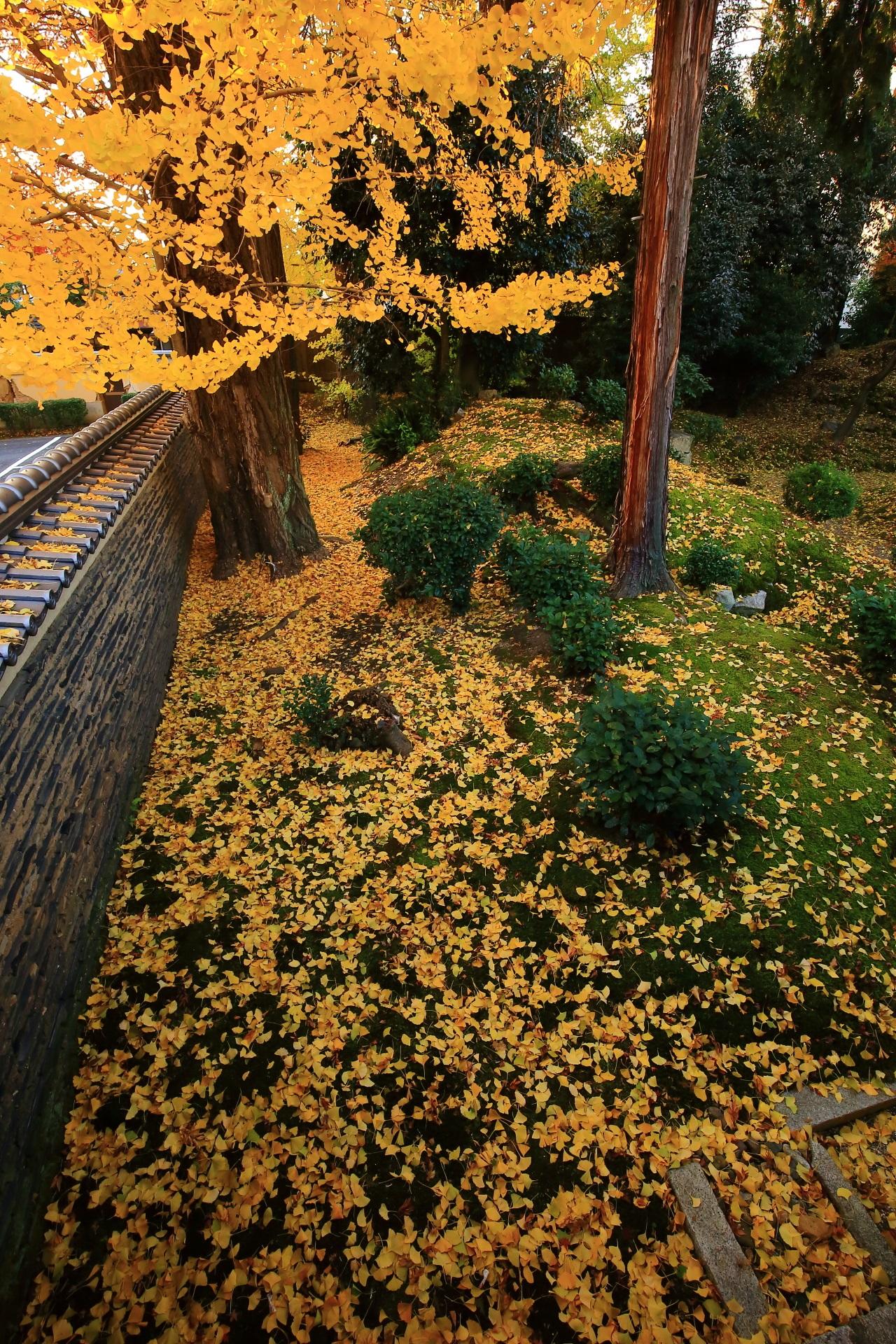 立本寺の散り銀杏の黄色い絨毯