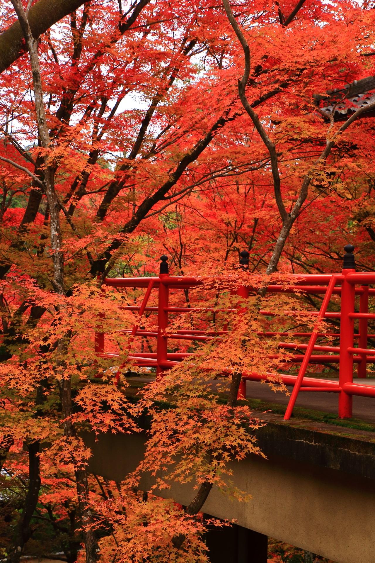 温かく鮮やかな秋の彩り