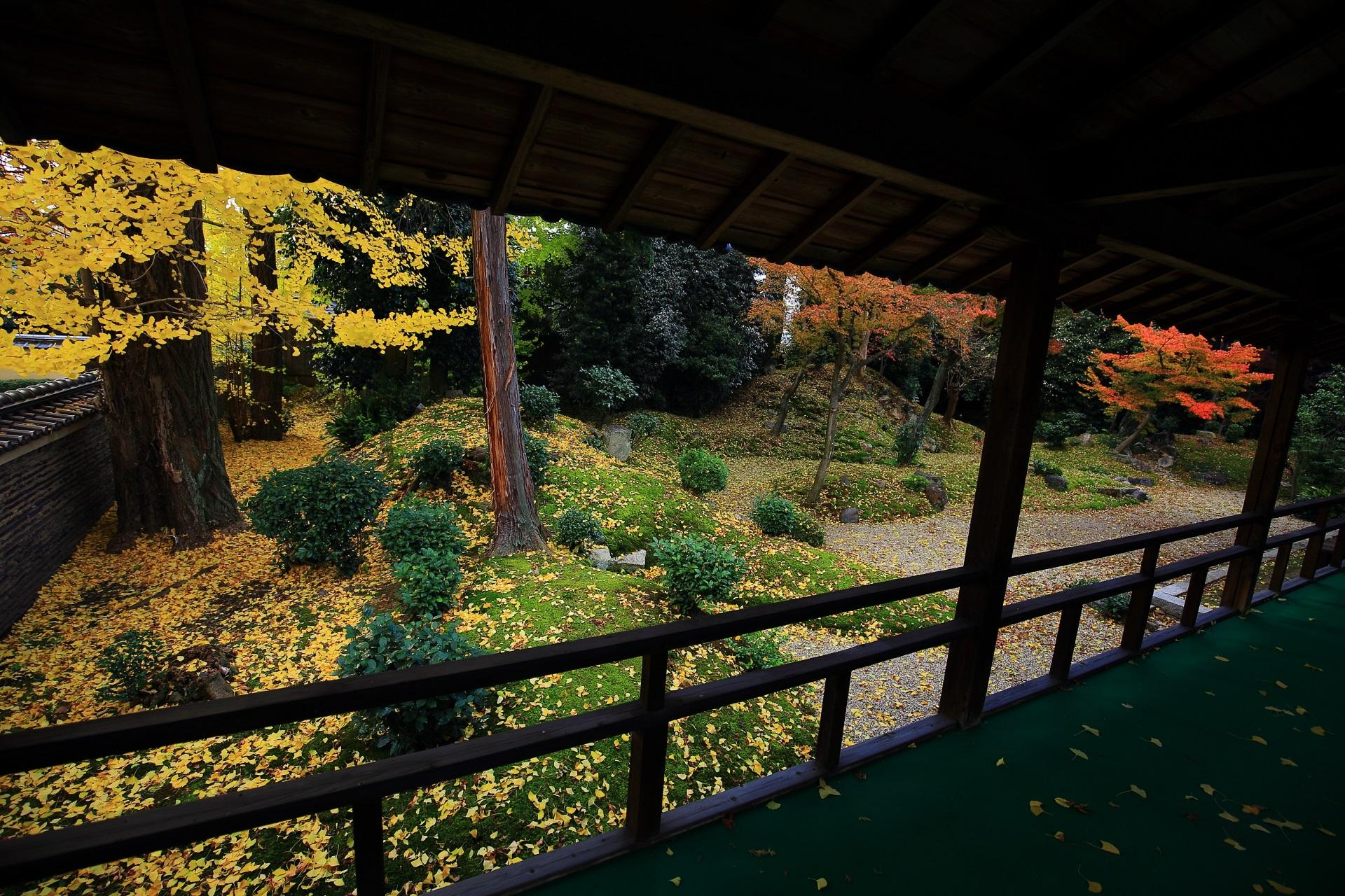 本堂と客殿の間の回廊から眺めた立本寺の見事な散り銀杏と紅葉
