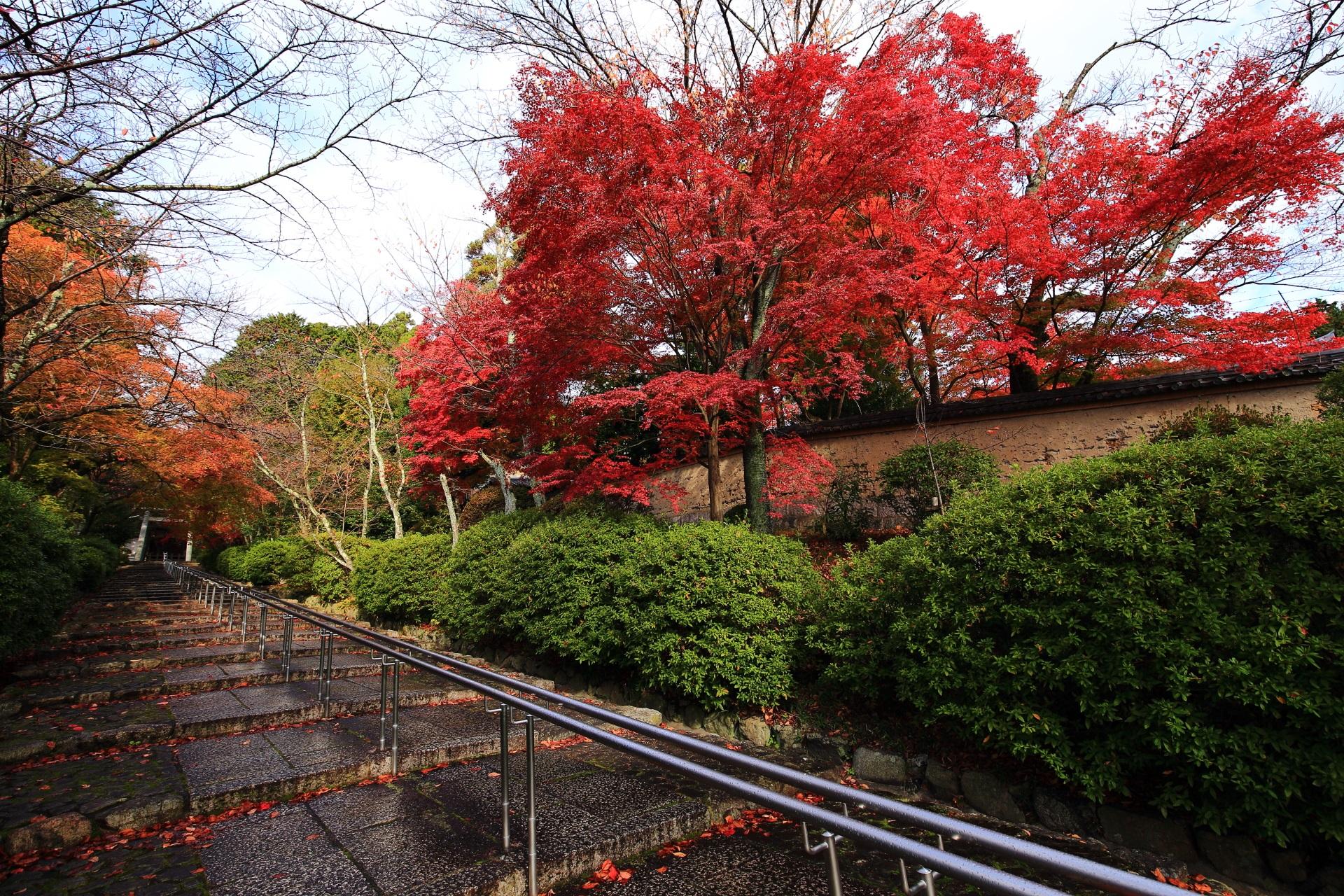 良く色づいた石段を彩る鮮やかな紅葉