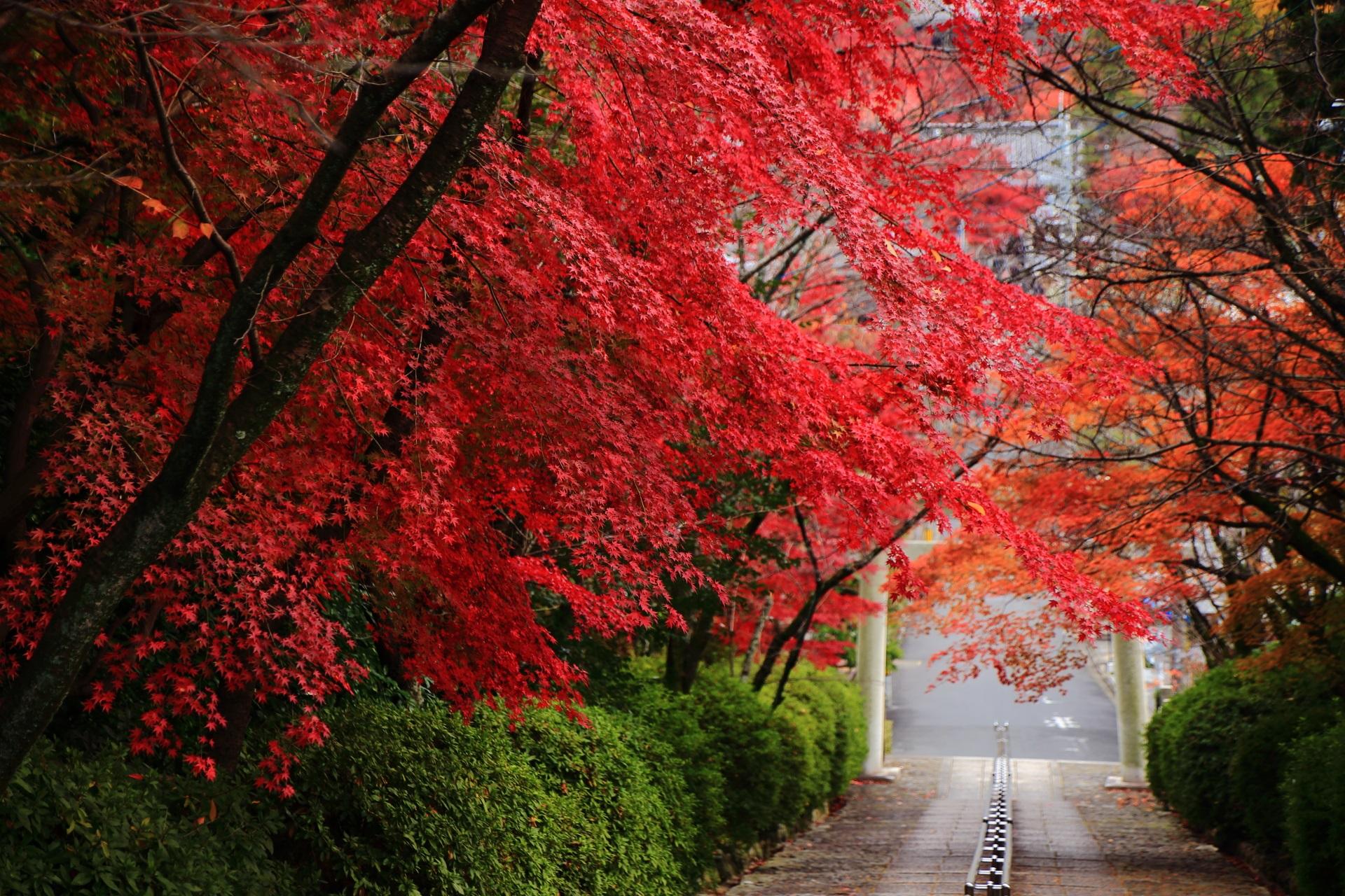 石段の上から眺めた鳥居と見事な色合いの紅葉