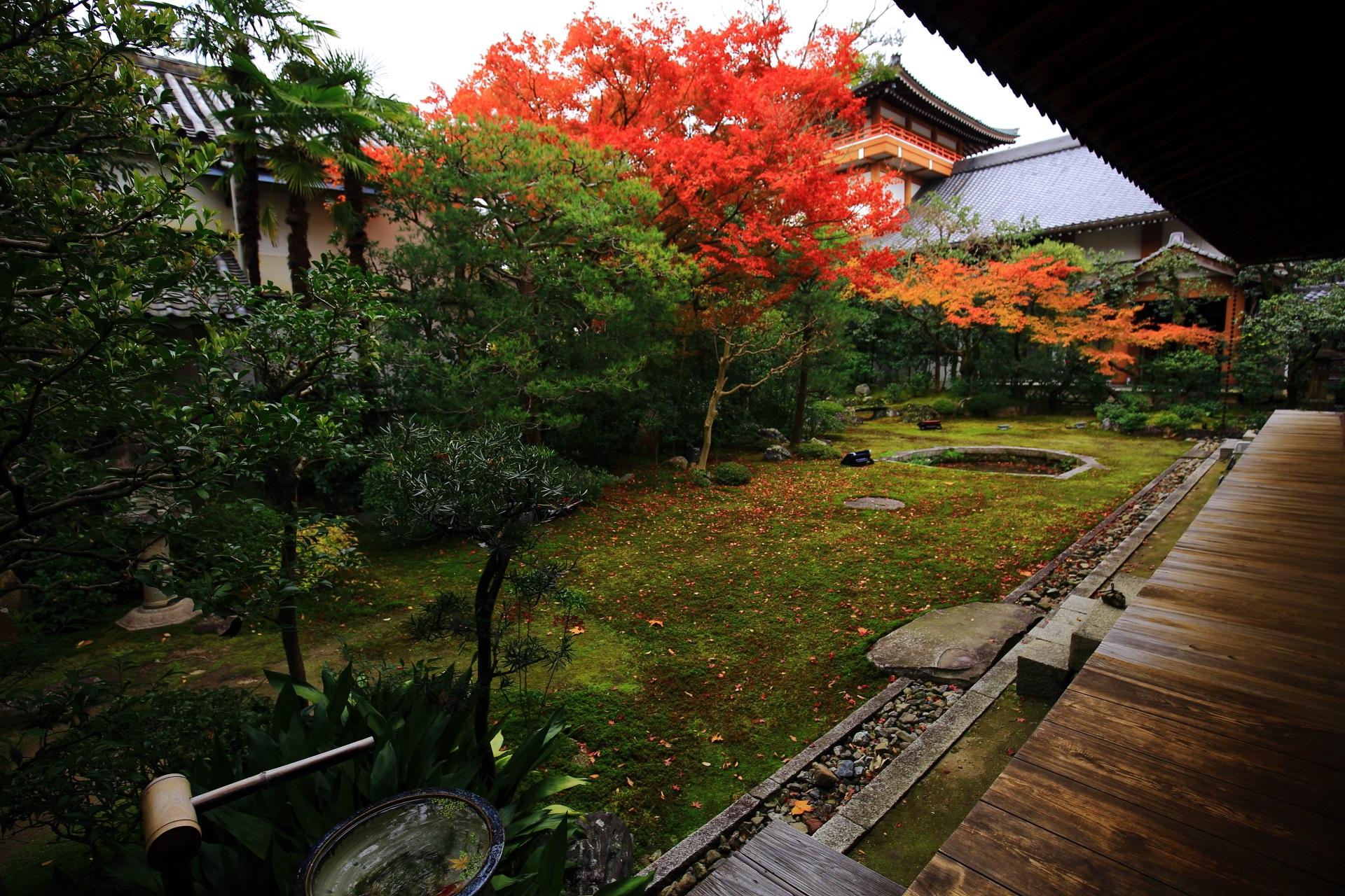 本法寺の素晴らしい紅葉と秋の情景