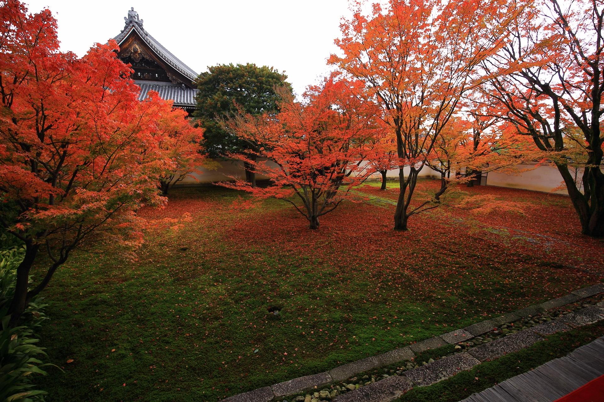 緑の苔と赤い紅葉の綺麗なグラデーション