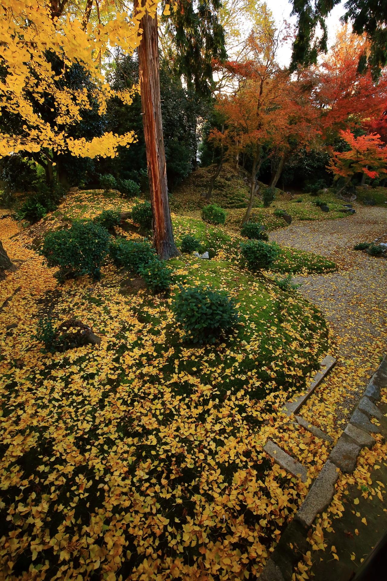 立本寺の素晴らしい散り銀杏や秋の彩り