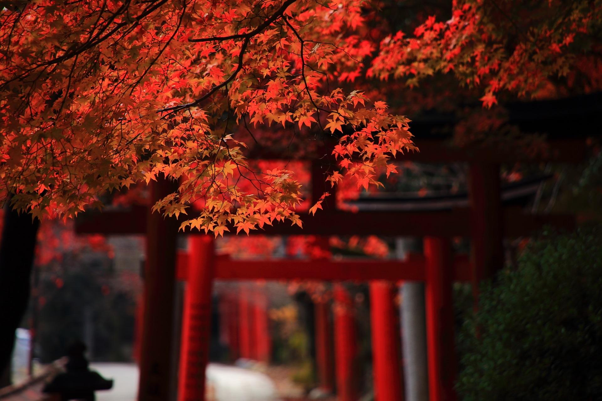淡い光を浴びてほのかに輝く紅葉