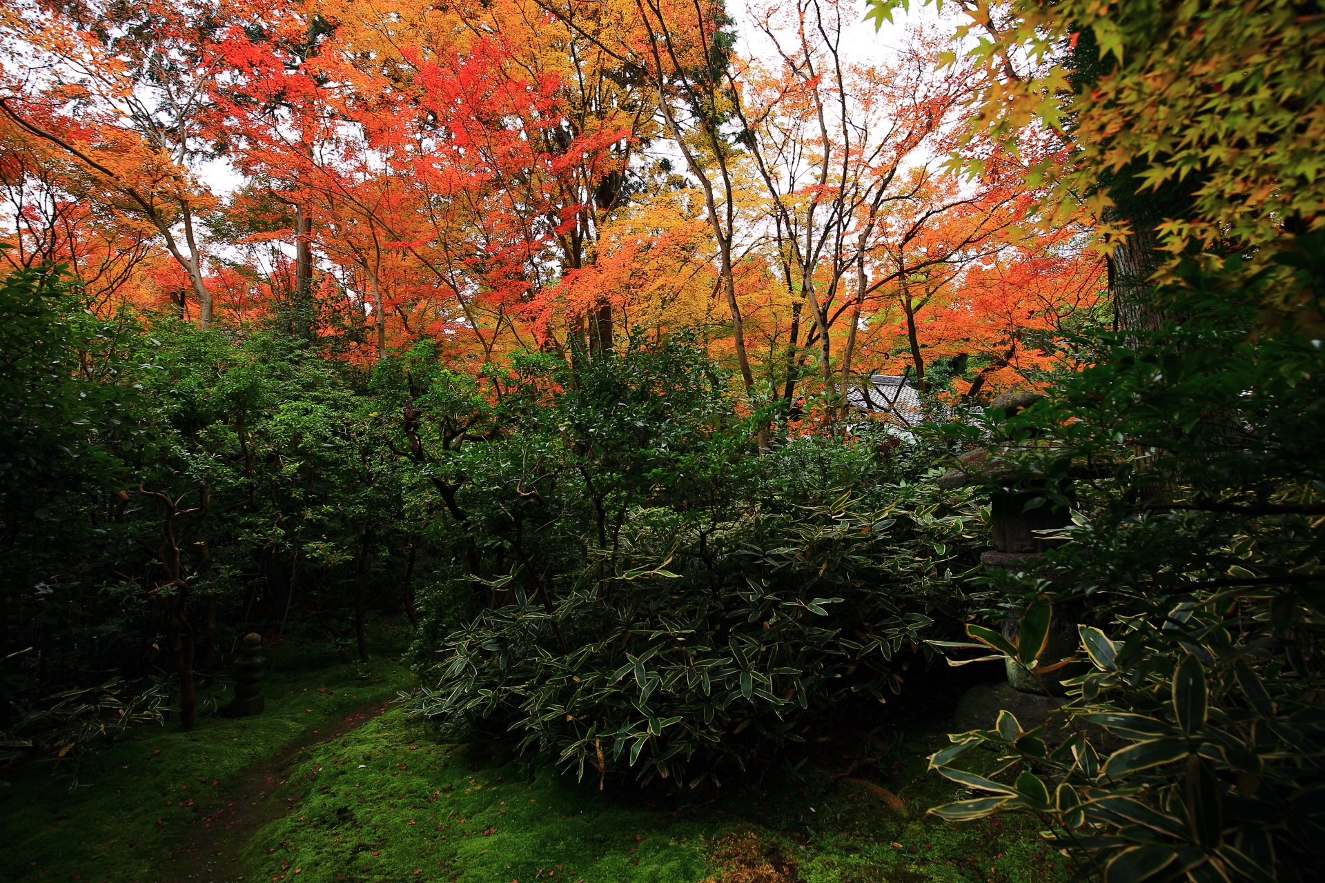 鮮やかな紅葉と多種多様な緑で溢れる秋の含翆庭