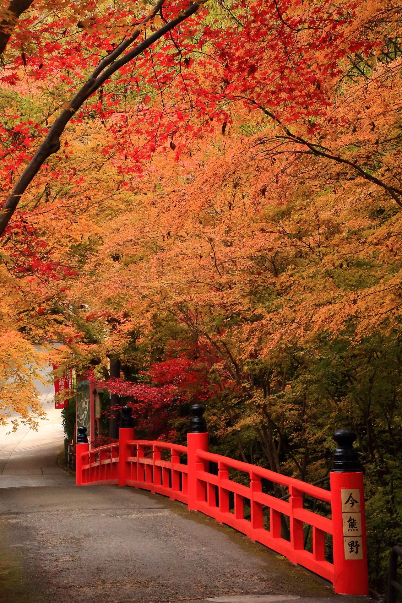 温かくほのかな紅葉に染まった朱色の鳥居橋
