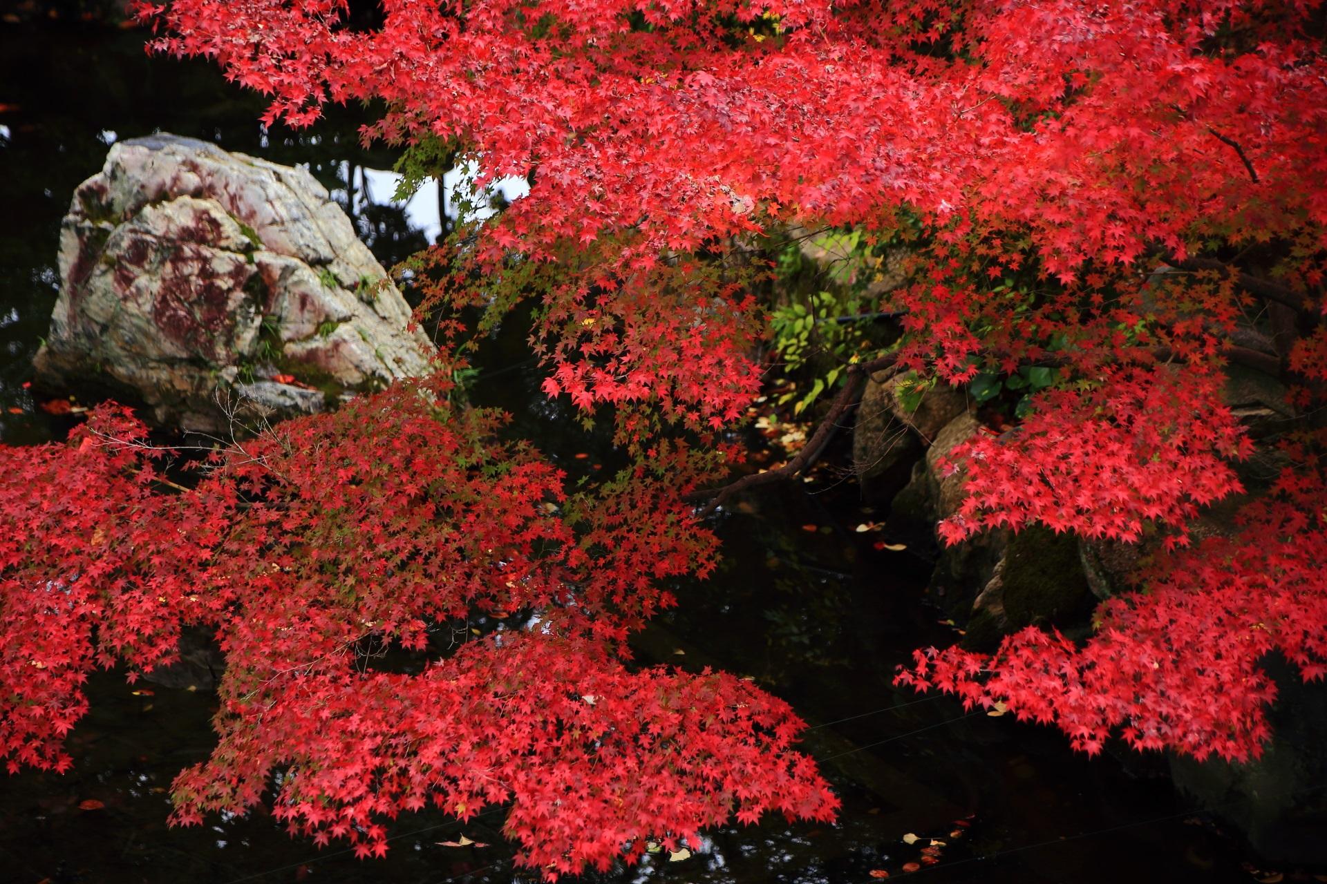 大谷本廟の水辺や岩を彩る鮮やかな紅葉