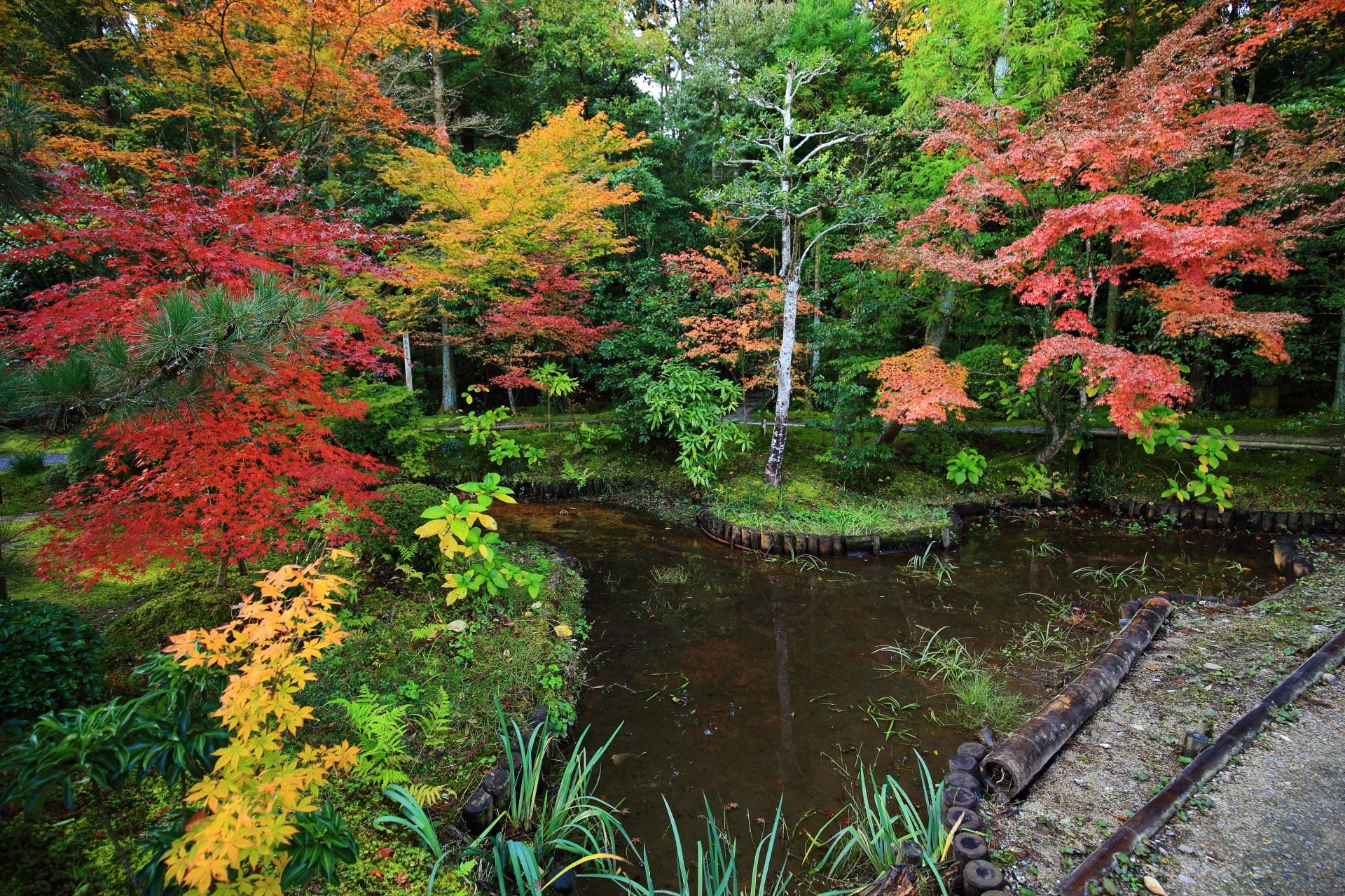 開山堂付近の池の色とりどりの紅葉