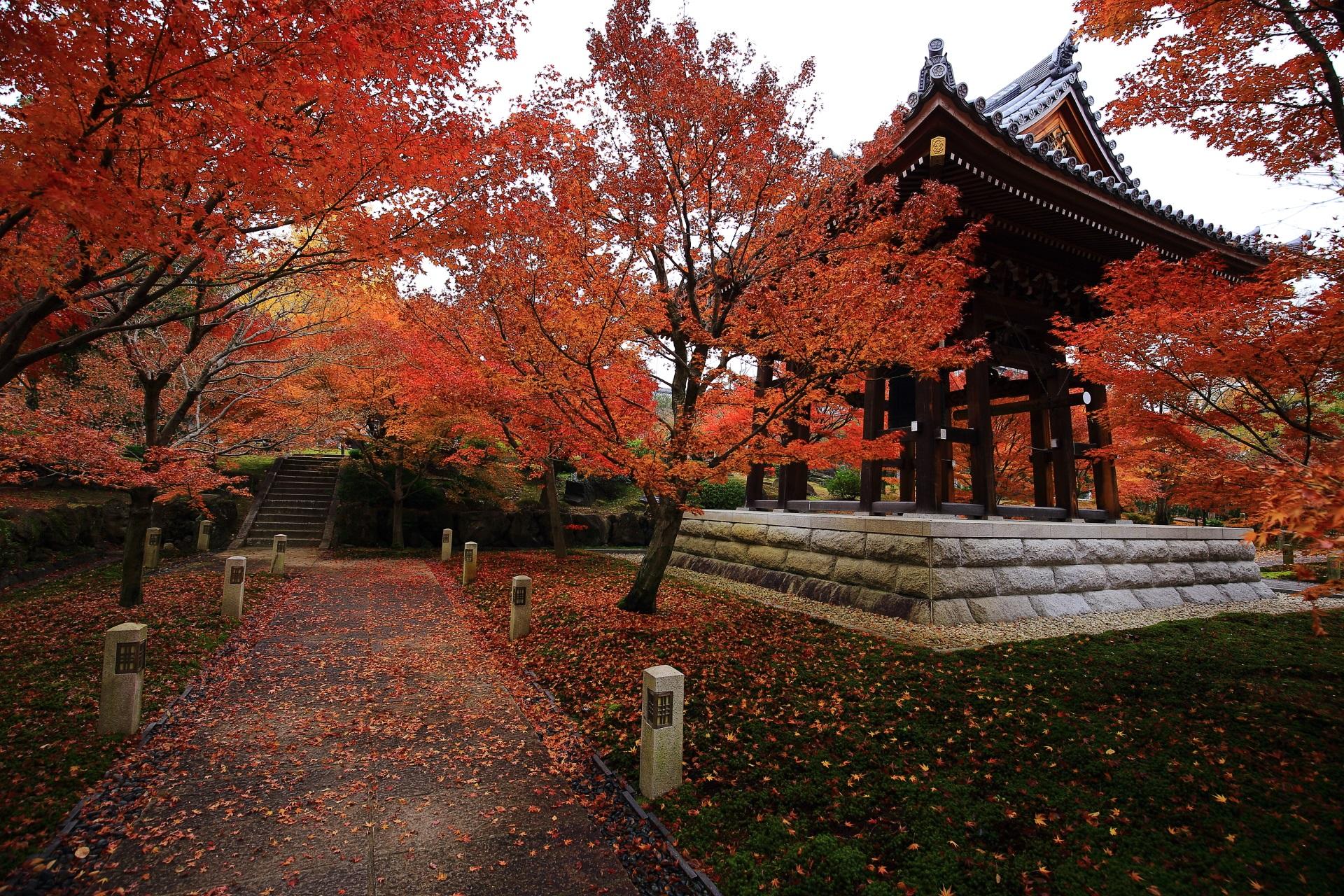 智積院の素晴らしい紅葉と散りもみじや秋の情景