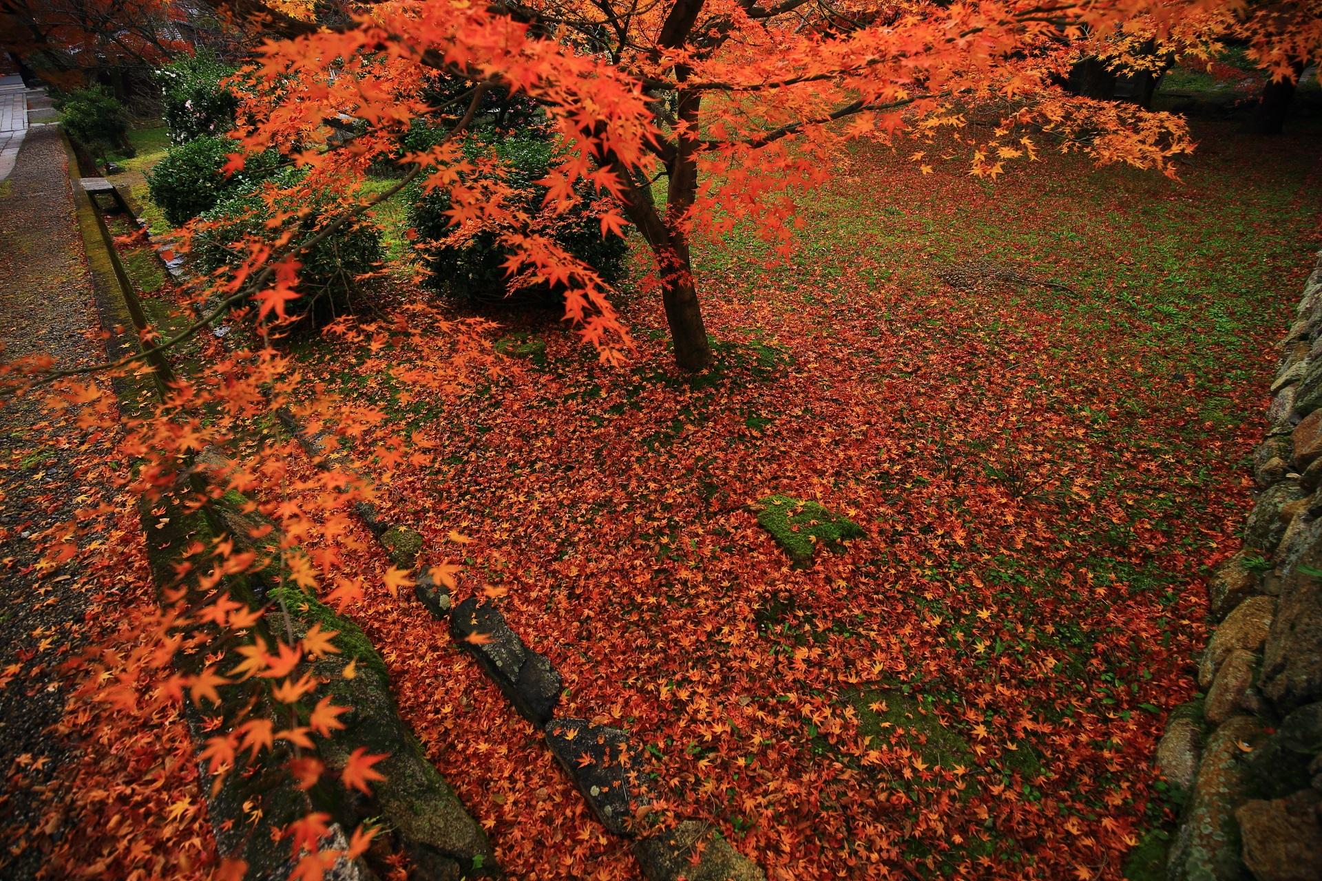 参道脇の豪快な散り紅葉